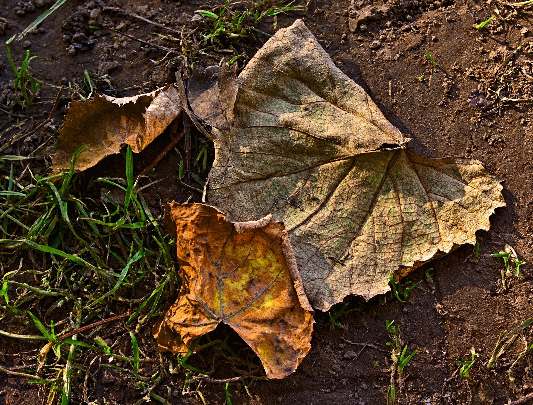 Fallen leaves by Евгений Козлов
