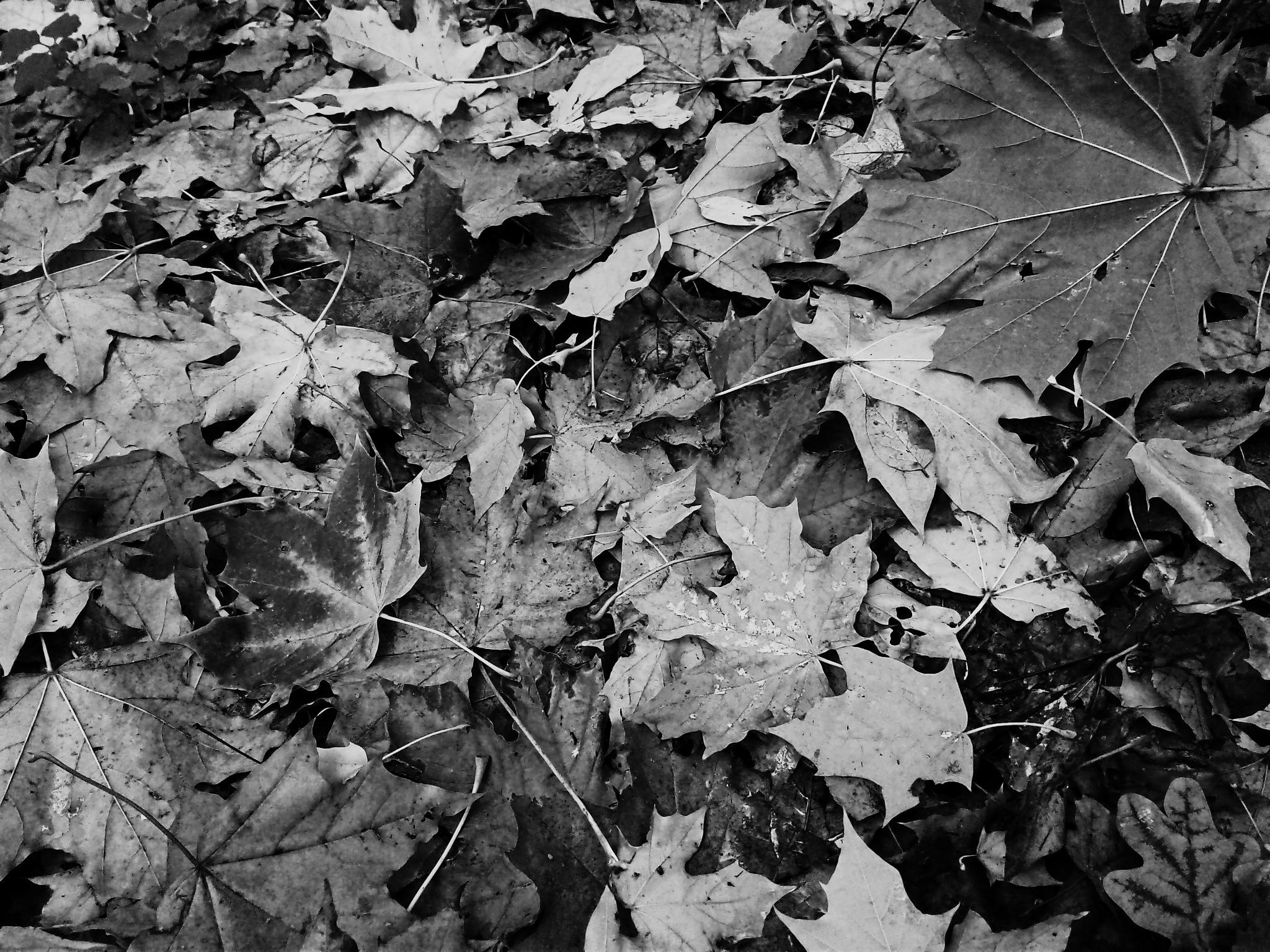 Fallen leaves / 2 by Евгений Козлов