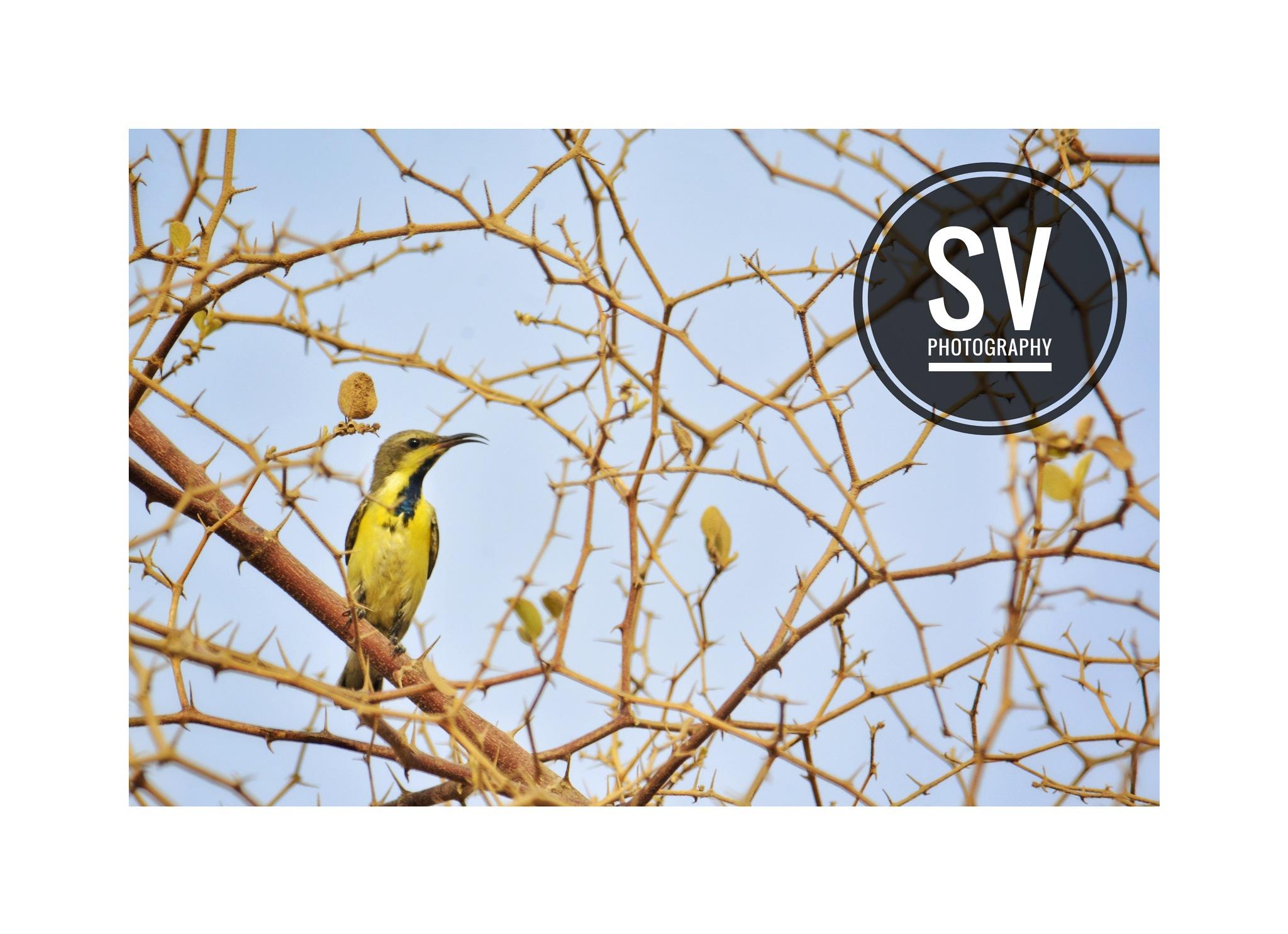 cick by shah vaibhav by Shah Vaibhav