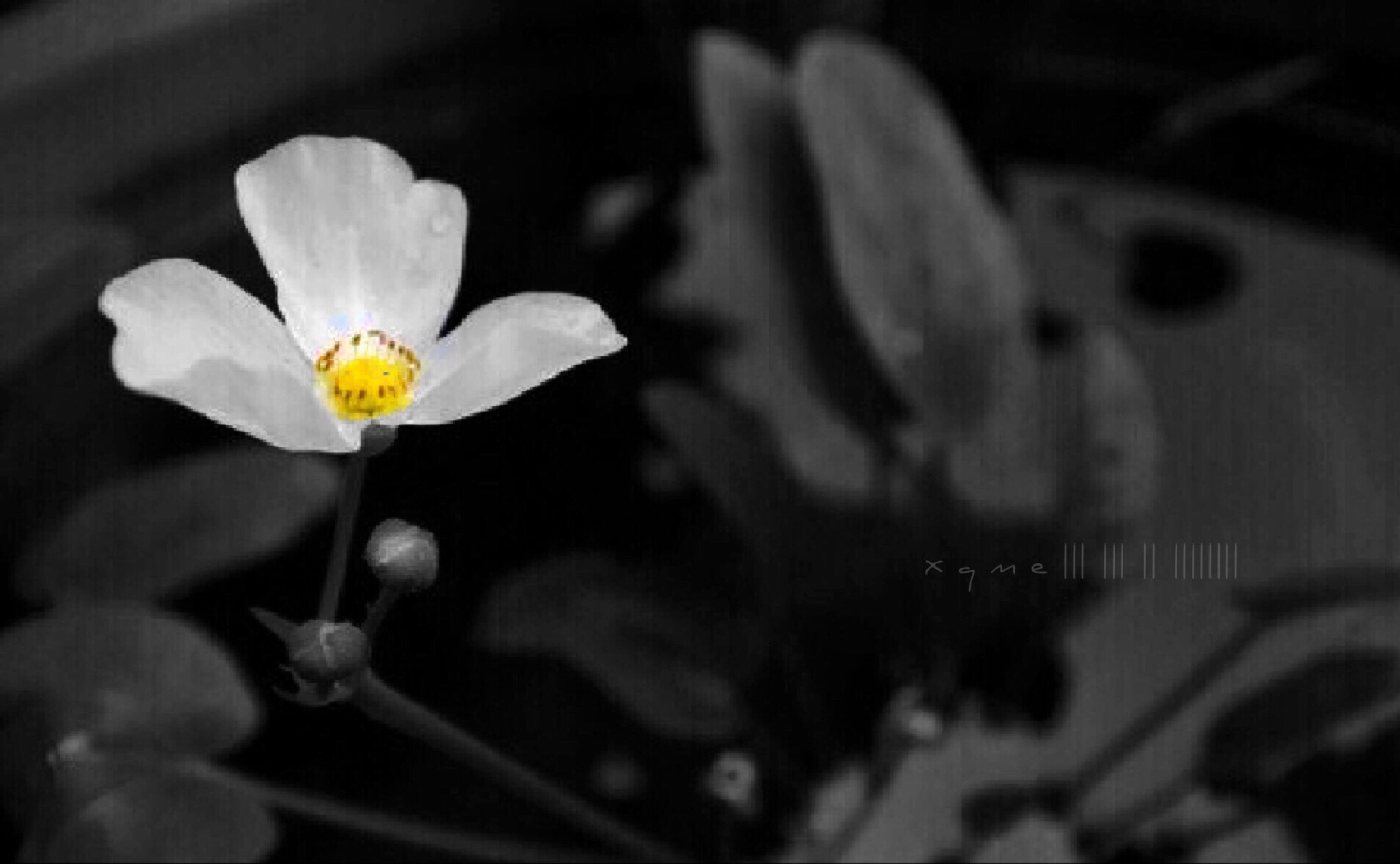 Paper lotus by XQMe
