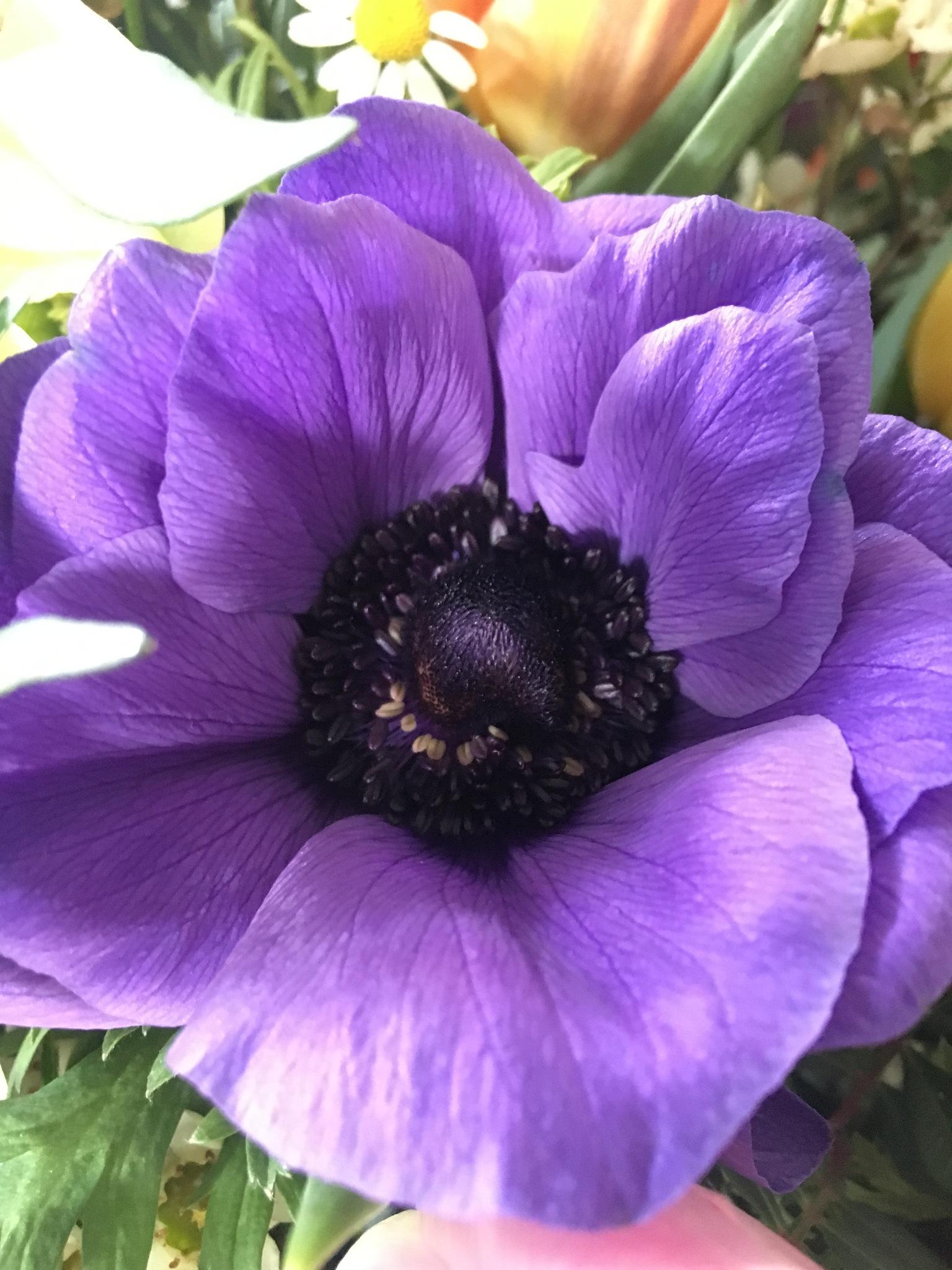 Flower by Christiane