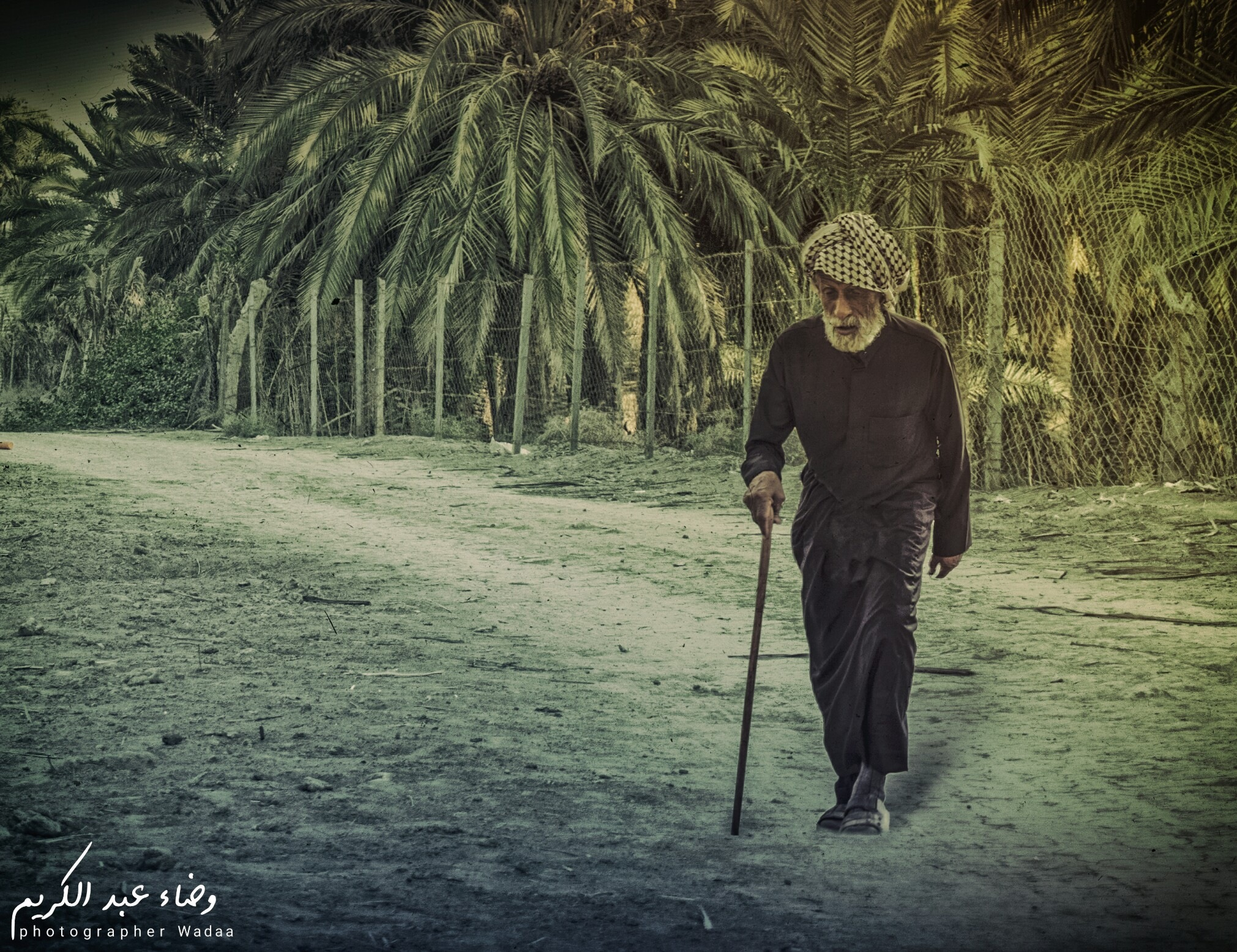 الشيبه by Wadaa