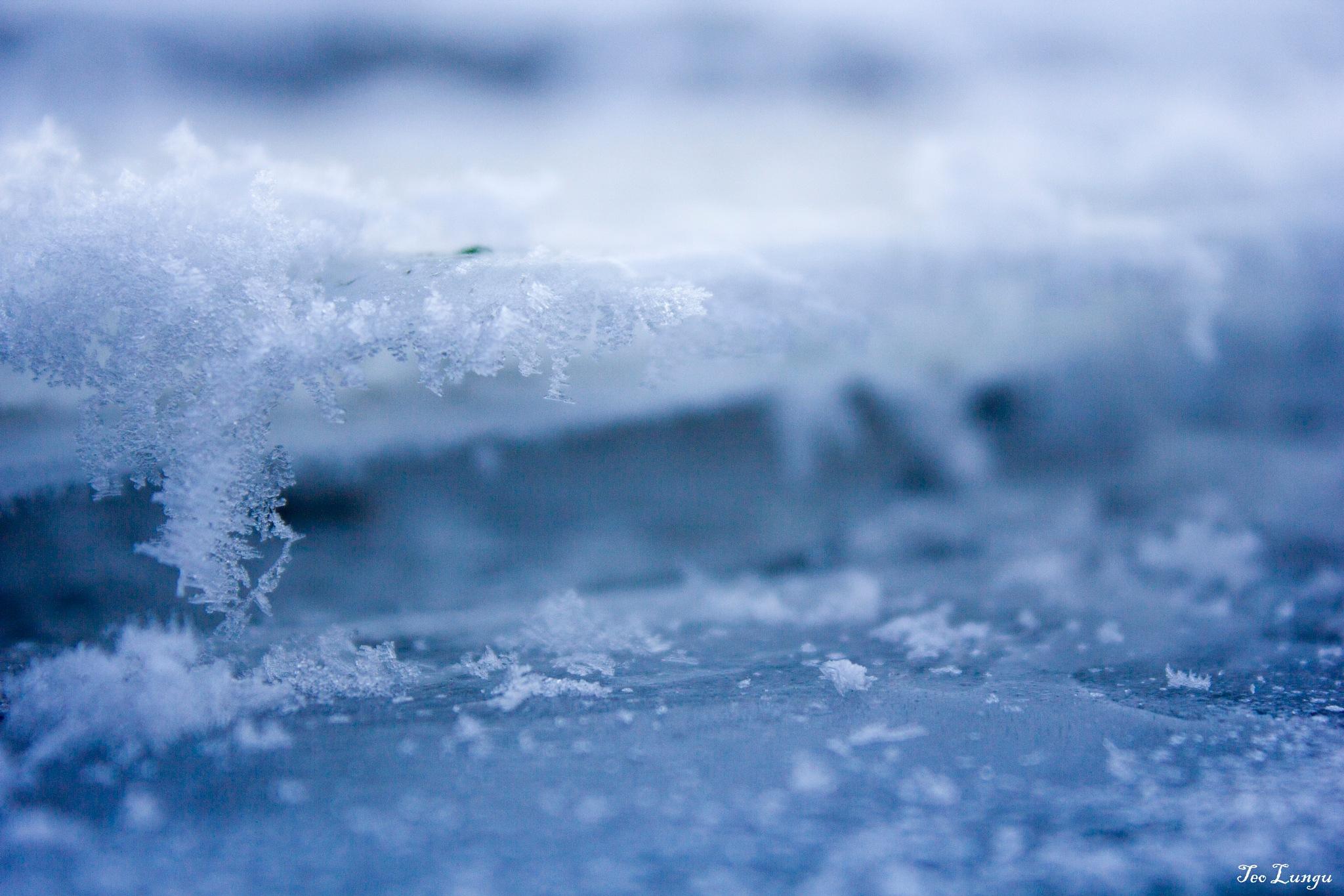 Freezing by Teo Lungu