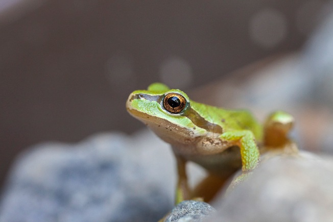 frog by antonia