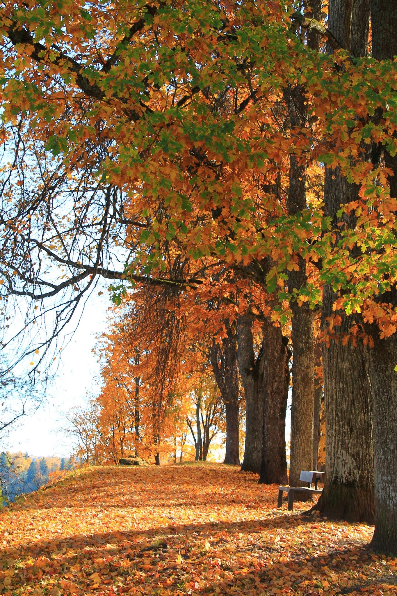 Golden autumn by Liina Kütt