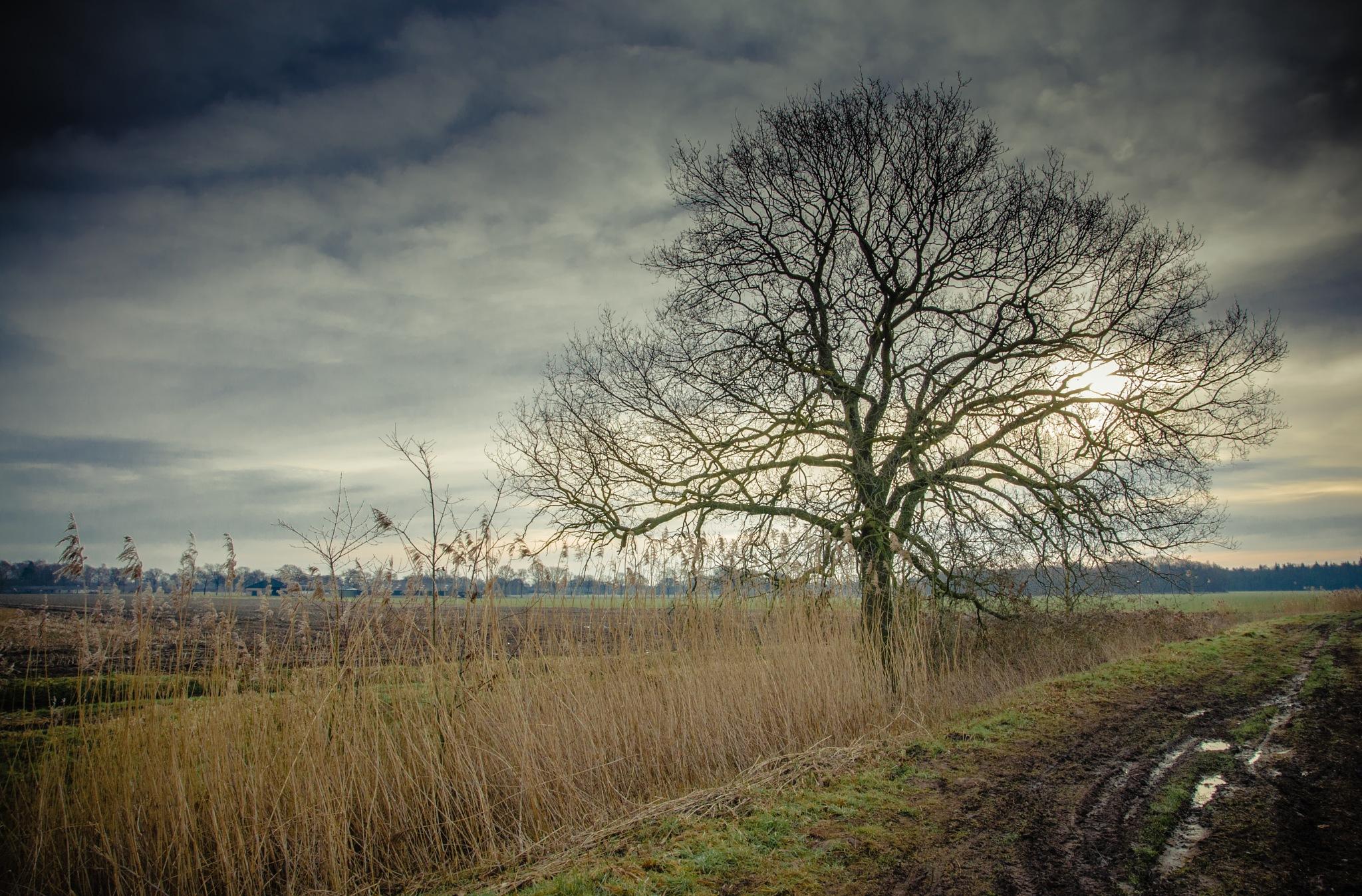 country morning by Marcin Majkowski