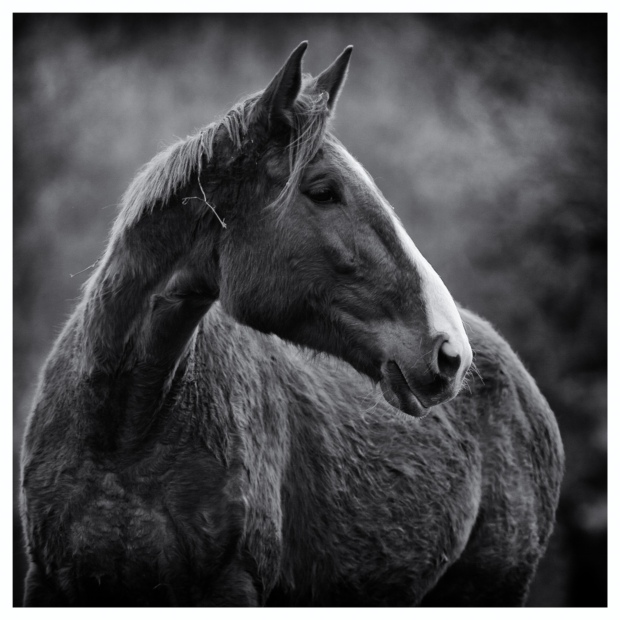 Photo in Animal #blackandwhite #travel #animal #horse