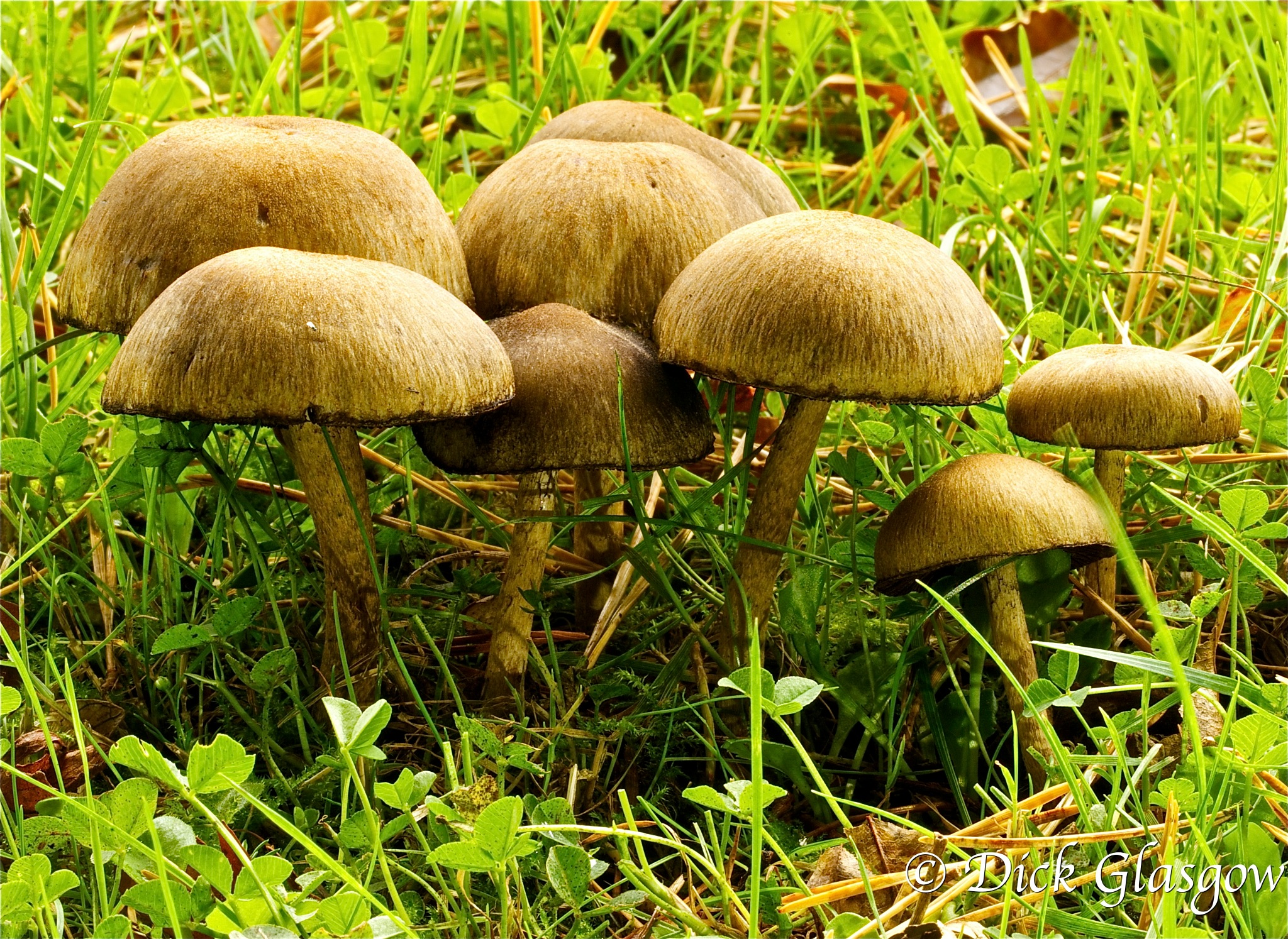 Bunch of Mushrooms by Dick Glasgow