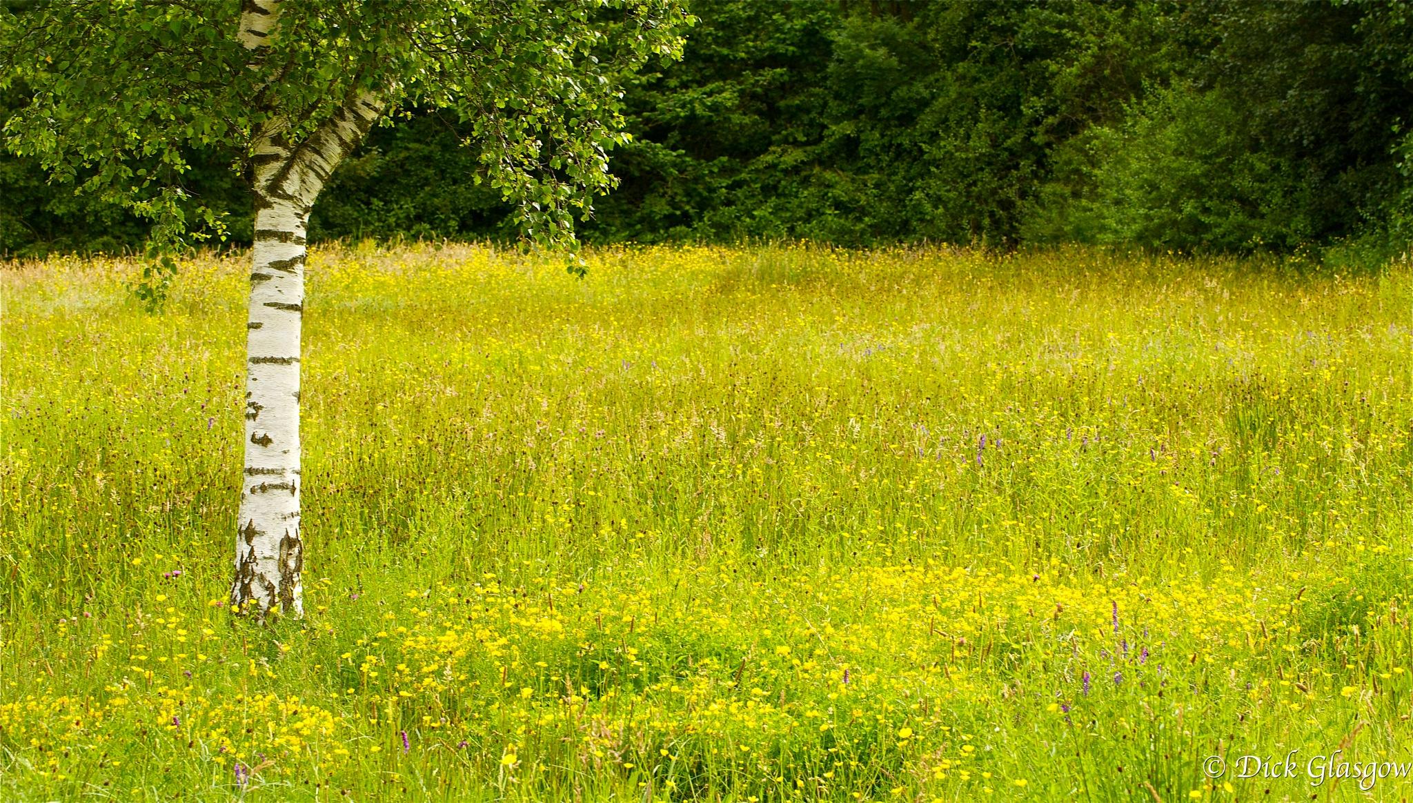 Wildflower Meadow by Dick Glasgow