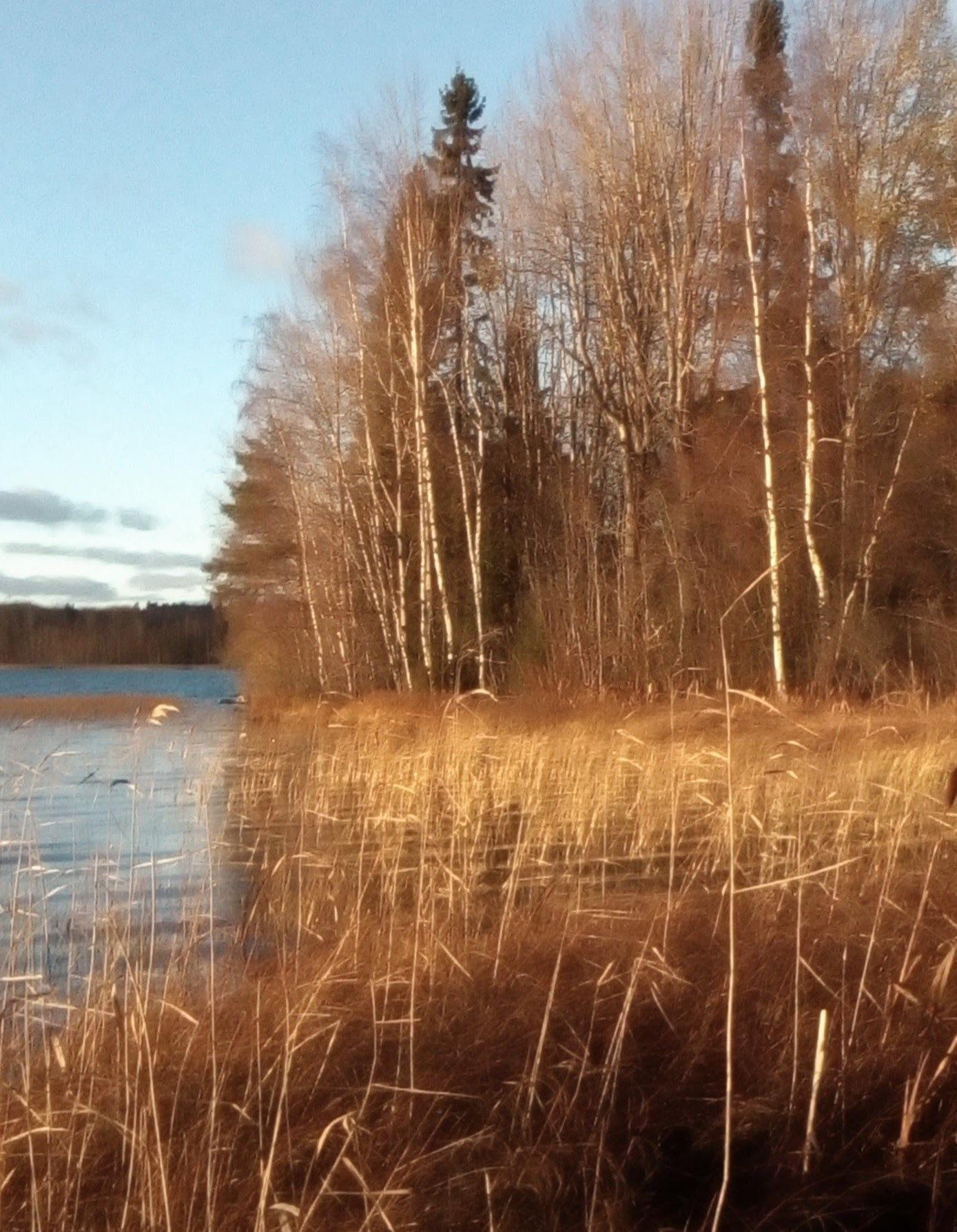 The Autumn in Finland  by Aila Hokkanen