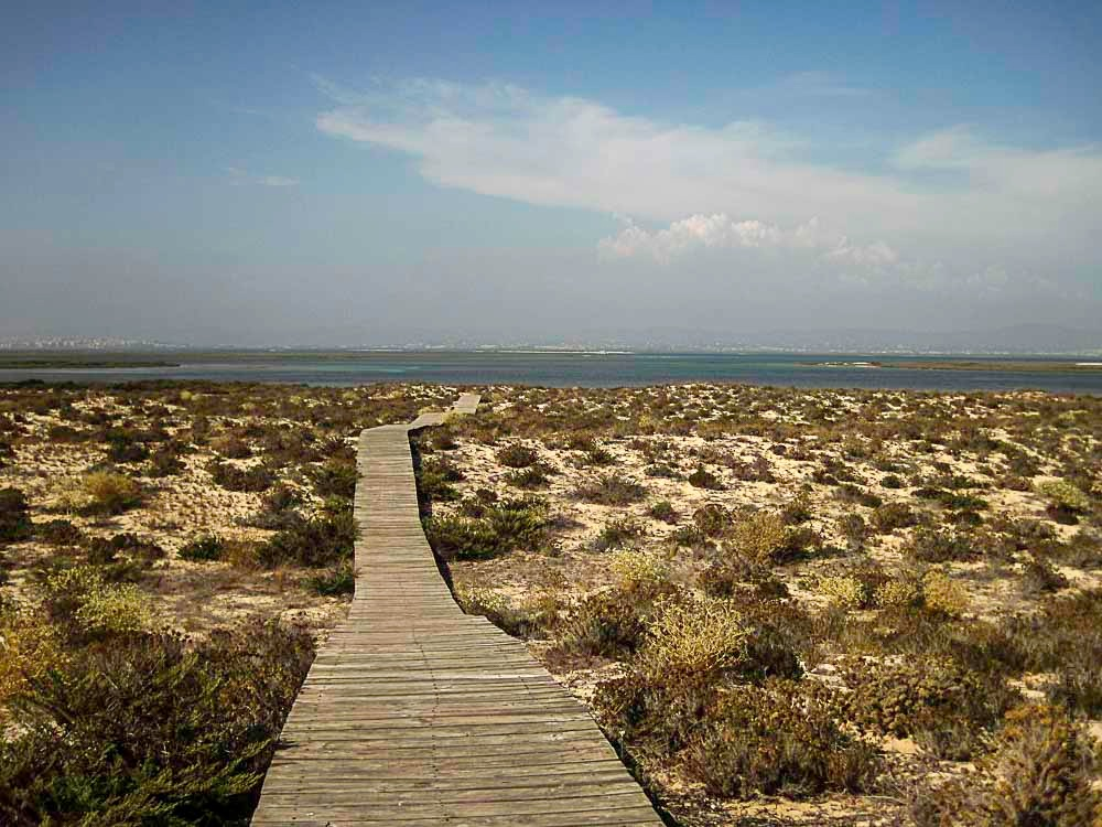 Desertas by Luis Neves
