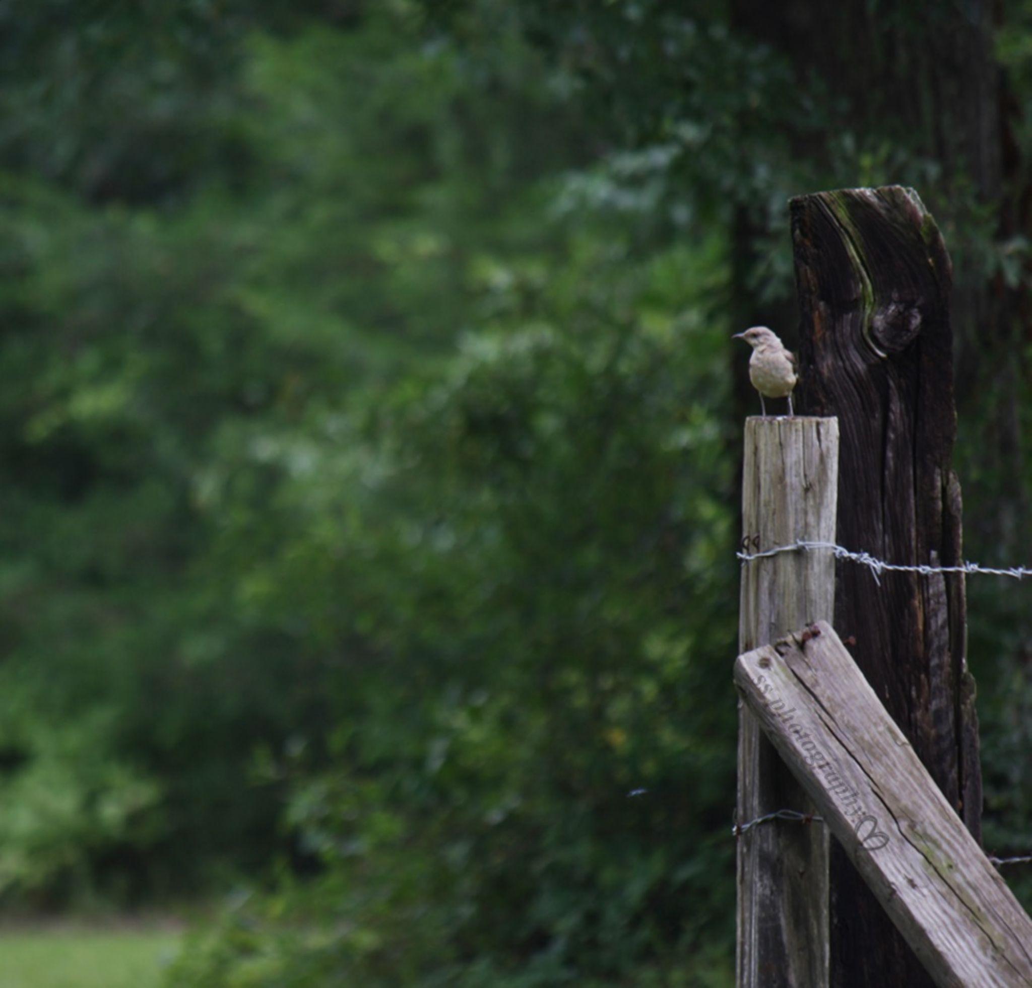 Bird Post by Sandy Beasley Seymore