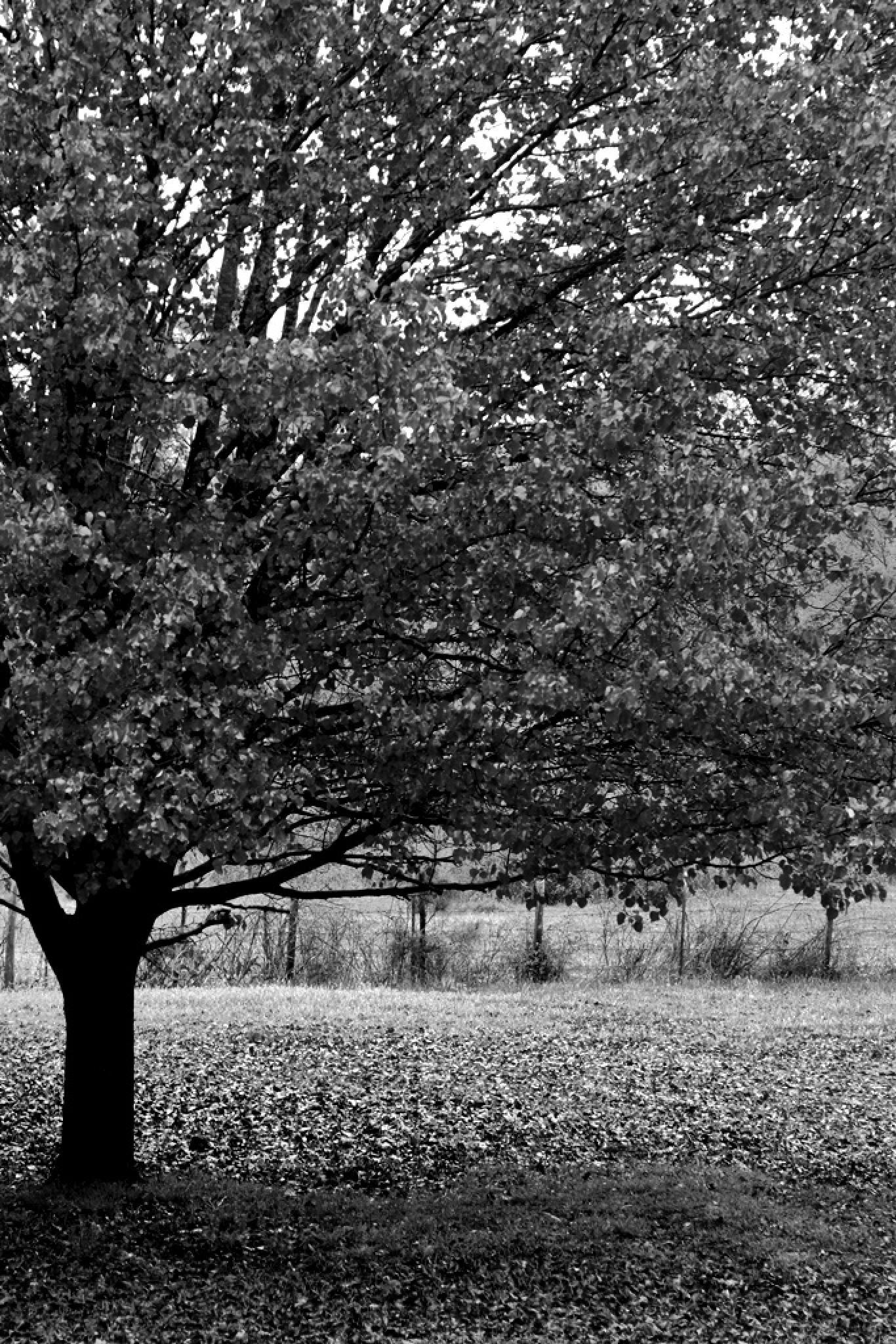 Side tree by Sandy Beasley Seymore