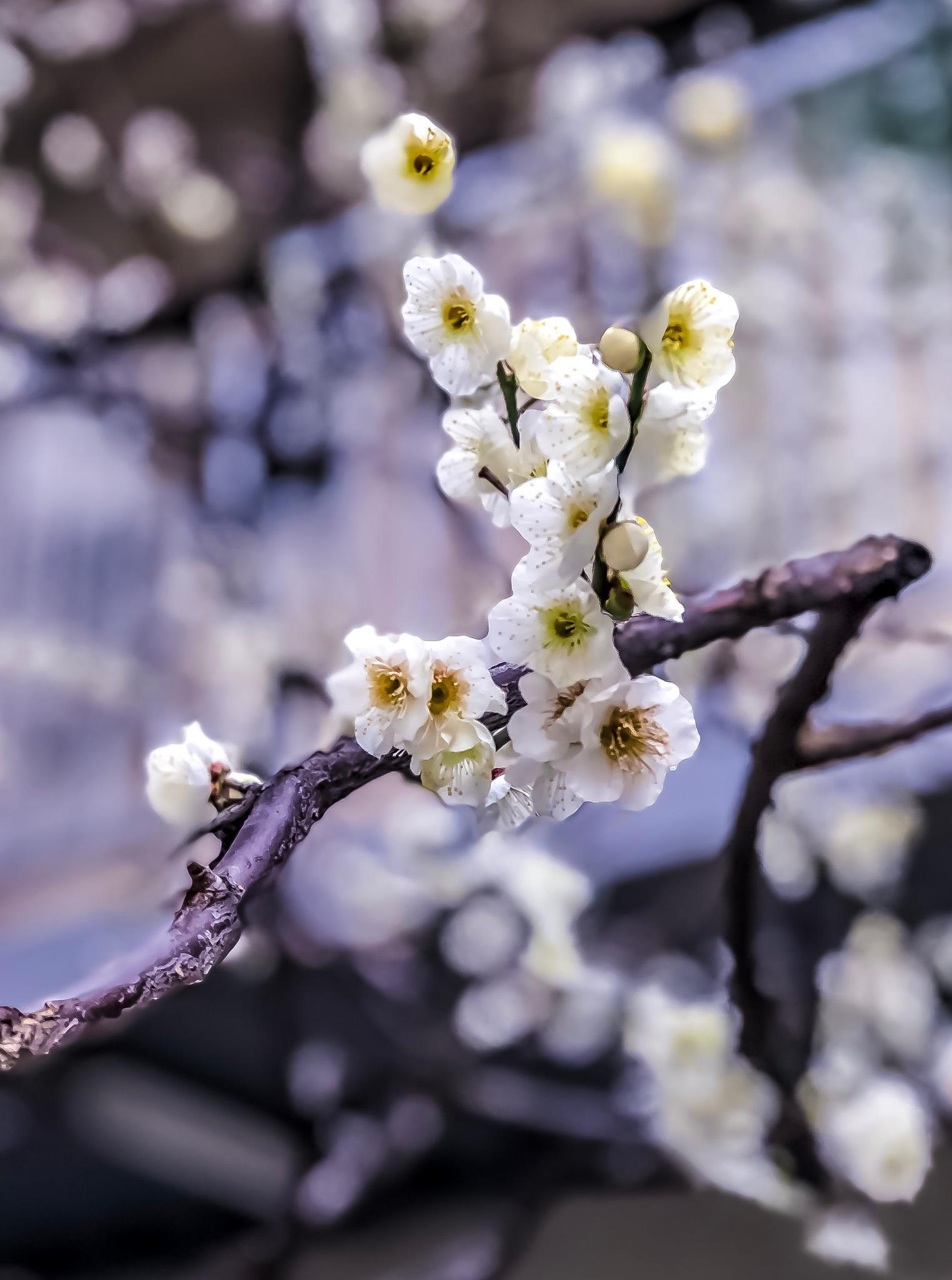 Spring Calling !!!!! by Amit Shrestha