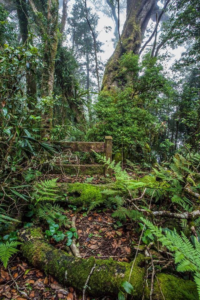 Rain forest   by Robert Makol