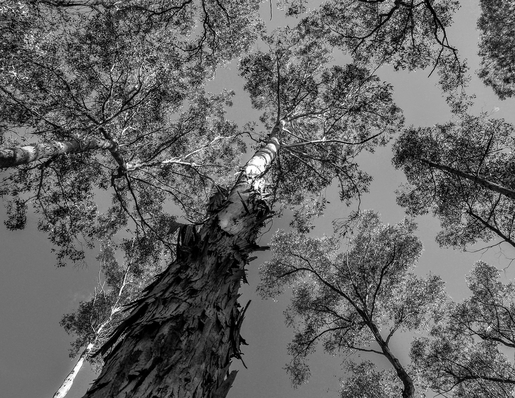 Look up and see the trees by Peter Lawrence