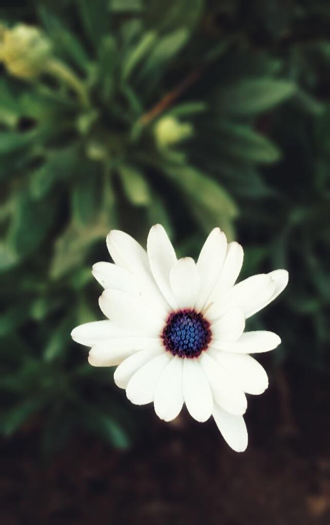 A flower  by FatimaH