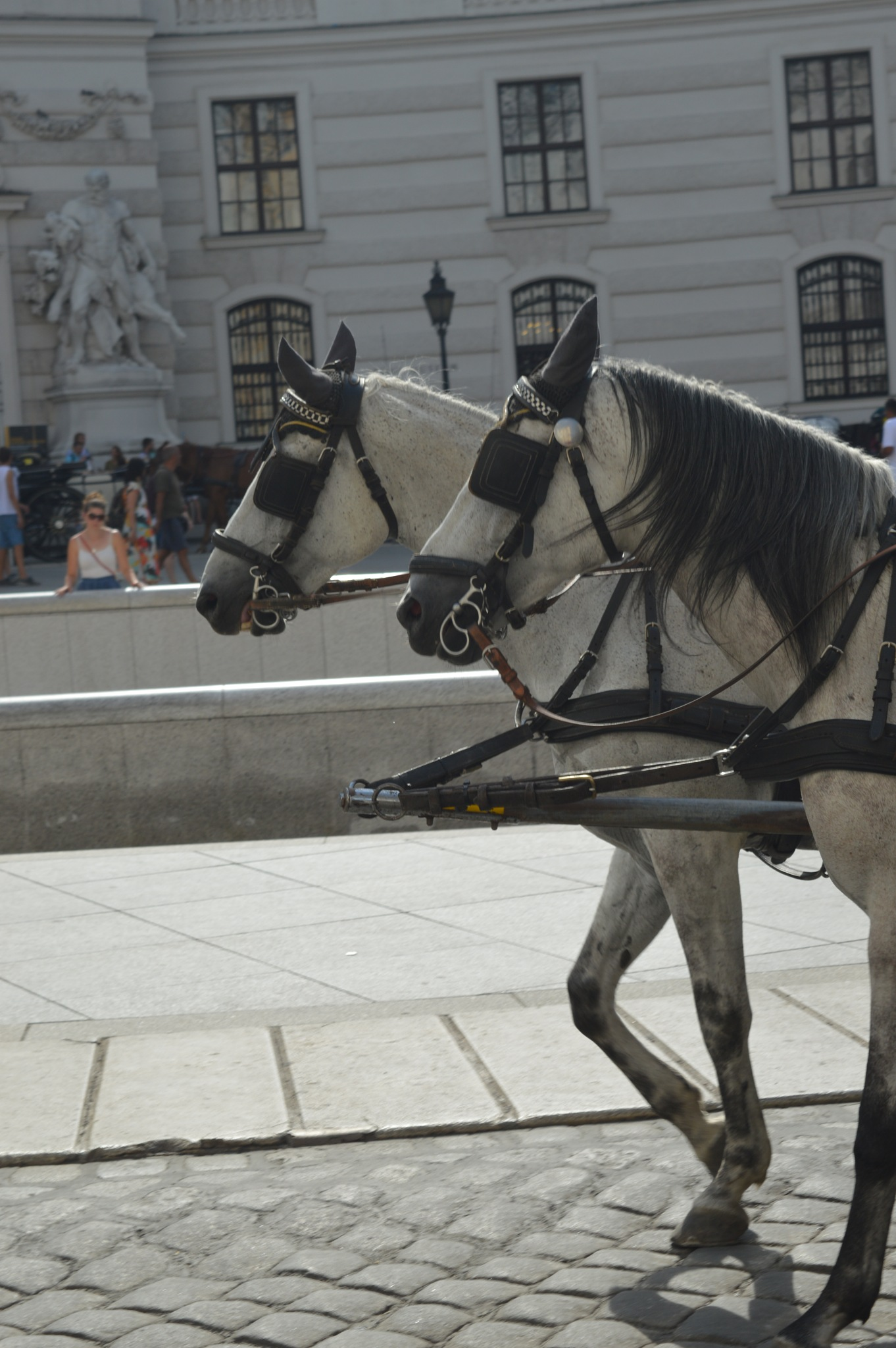 Horses in Vienna/Austria by Katharina Seiler