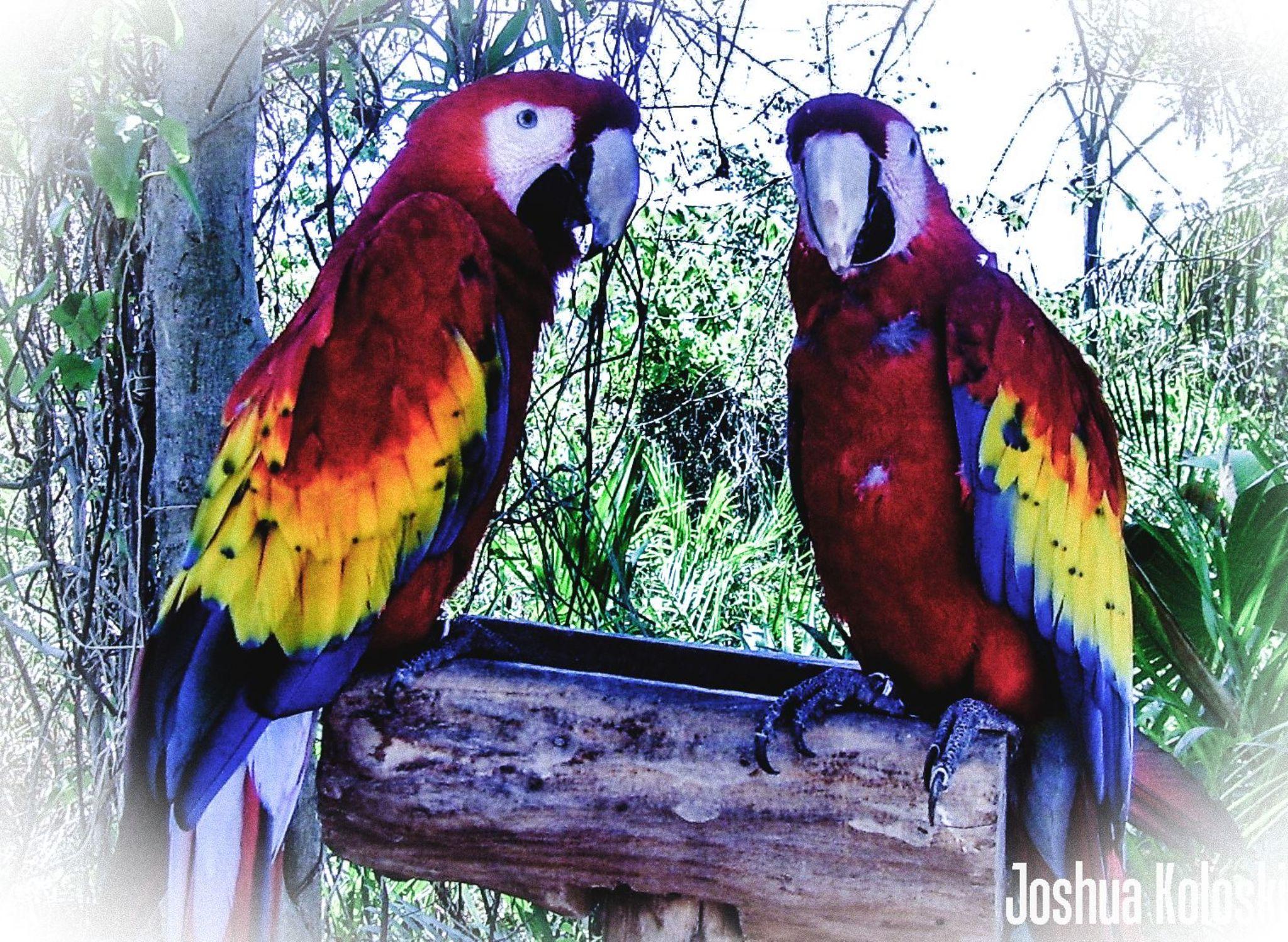 Birds by Joshua Koloski