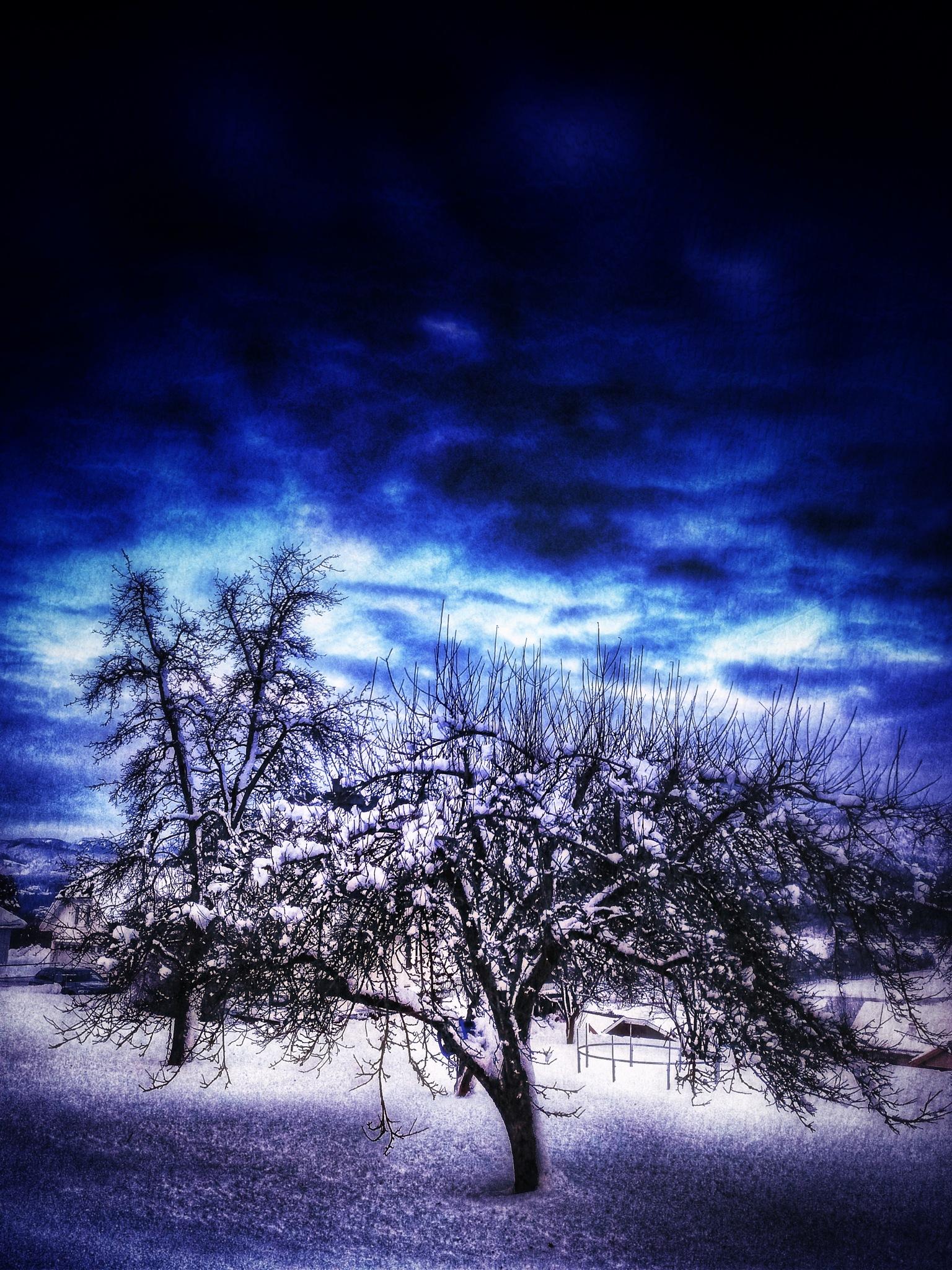 Winter tree by Johnny Lund