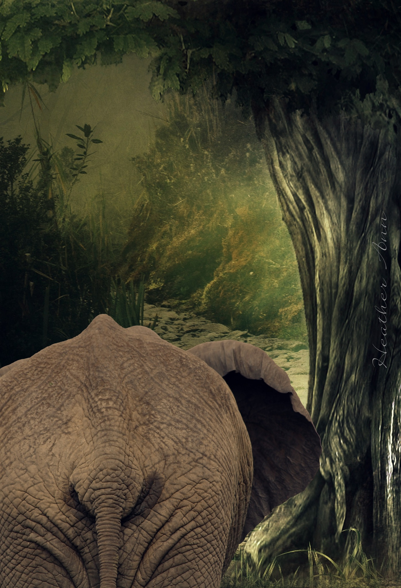 Jungle Book by Heather Ann Plew