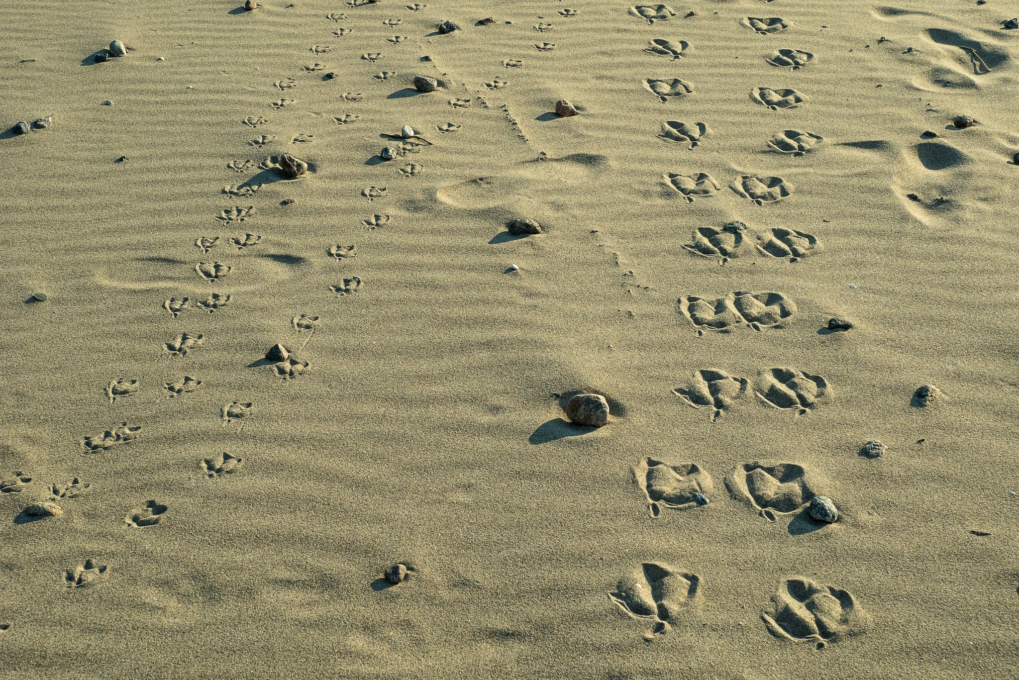Family, tracks in the sand by Mats Bodlund