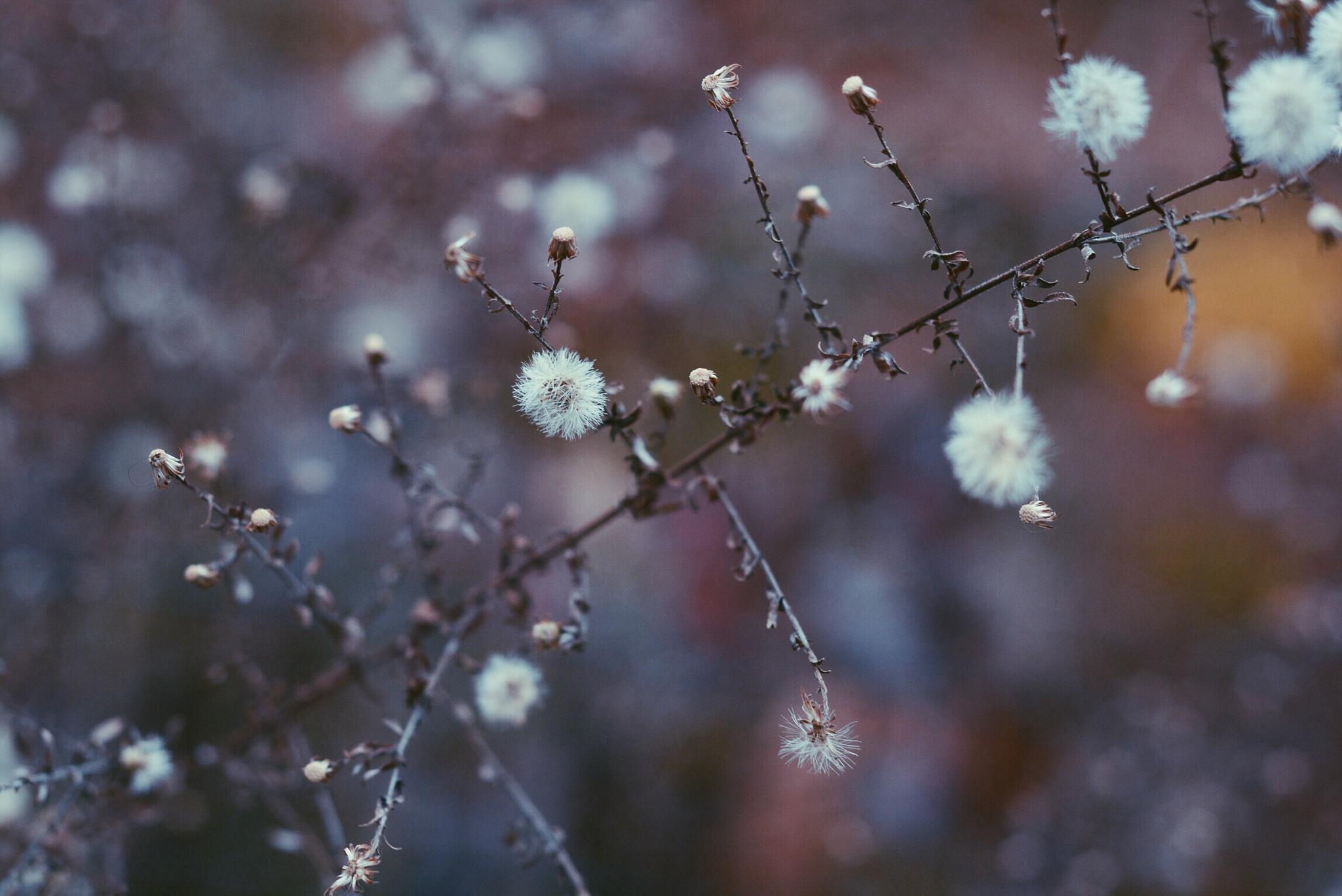 Floral  by Hana Photography