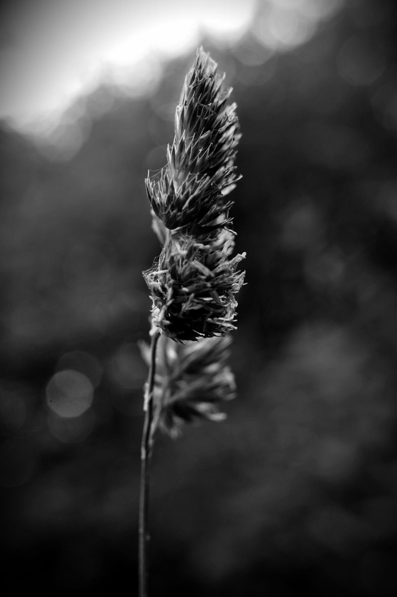 1 Stalk by Jacob Smith