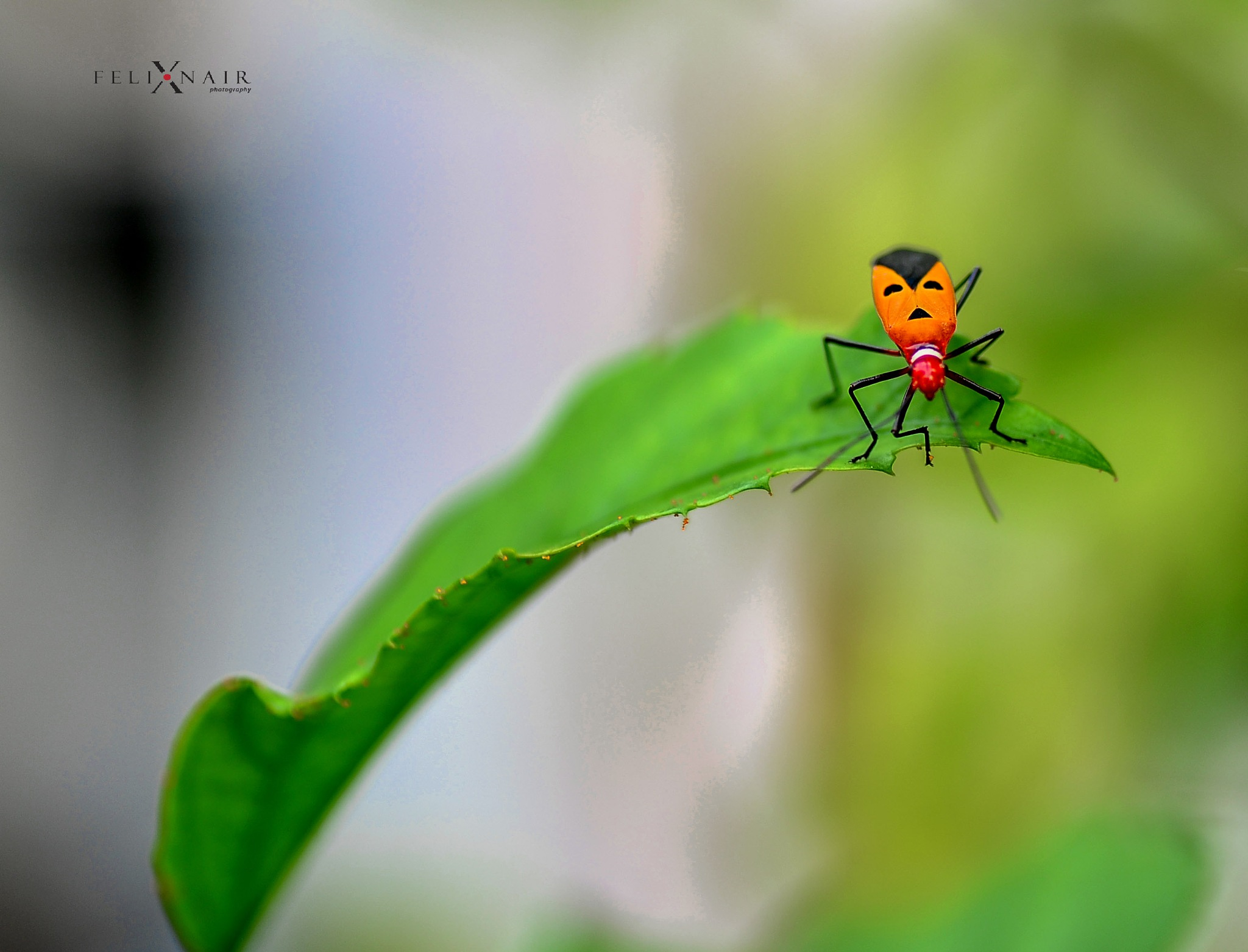 Man face bug by FNA/LKN