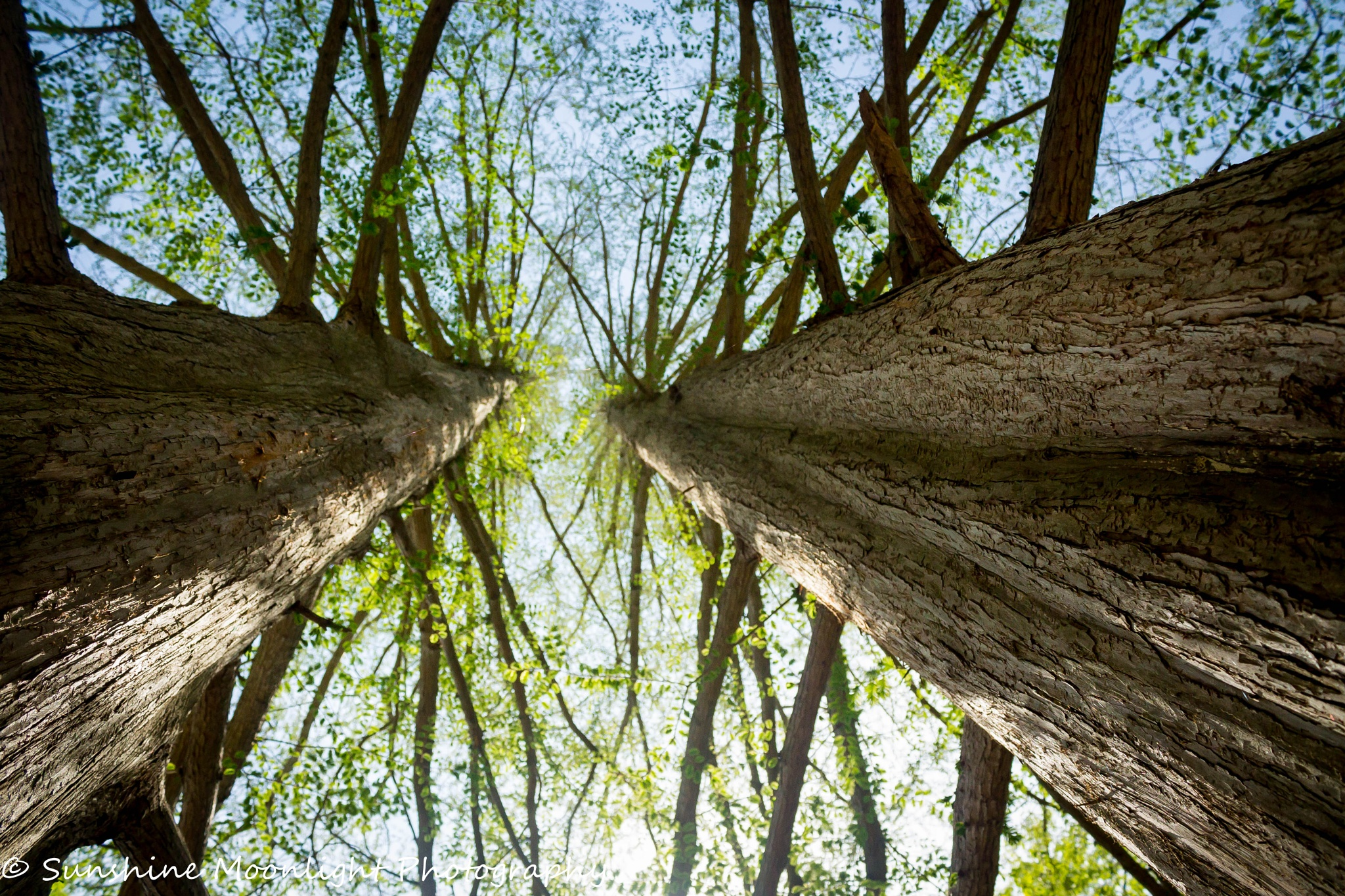 Photo in Nature #two #trees #vector