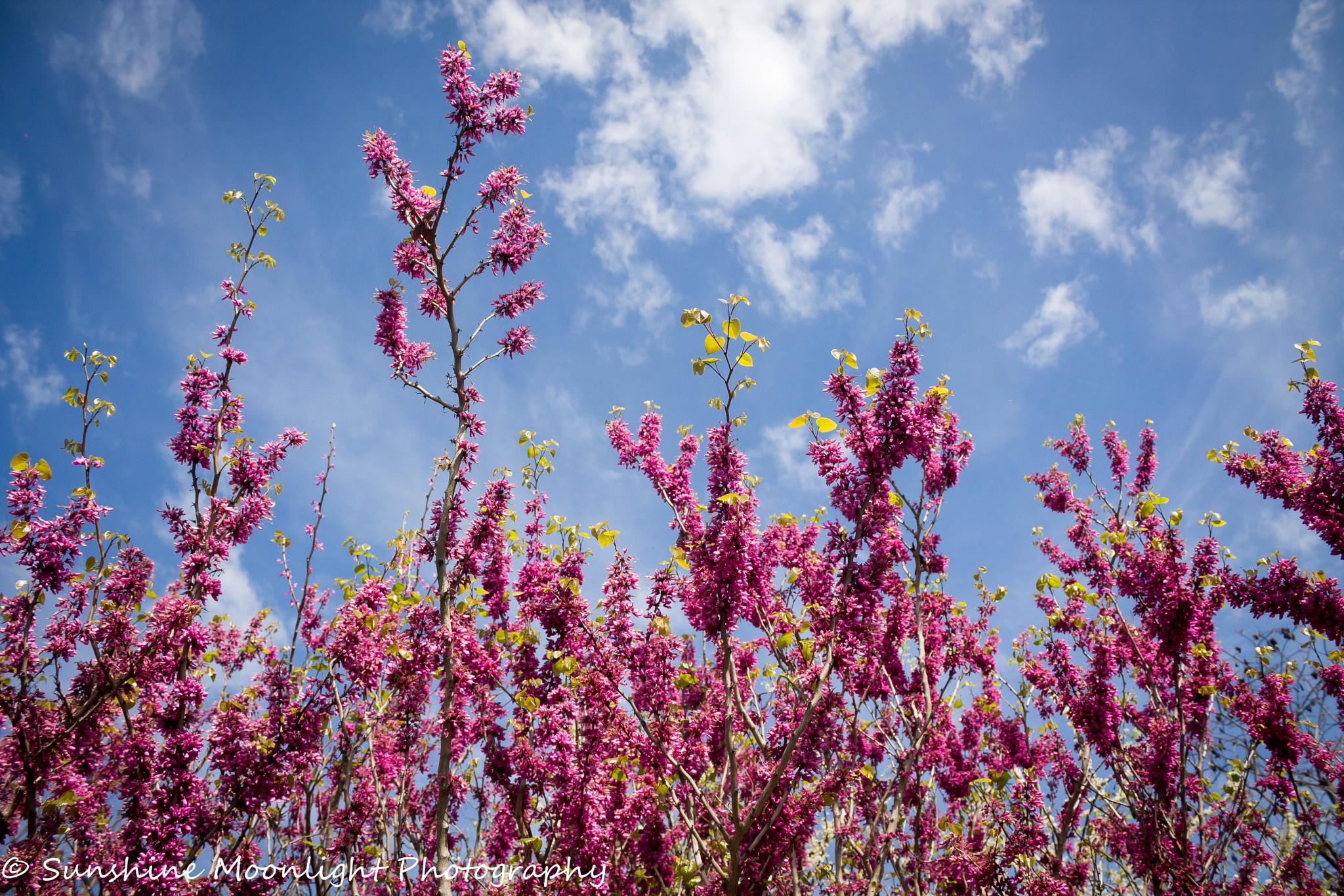 Pink Tree by Sarah Smith