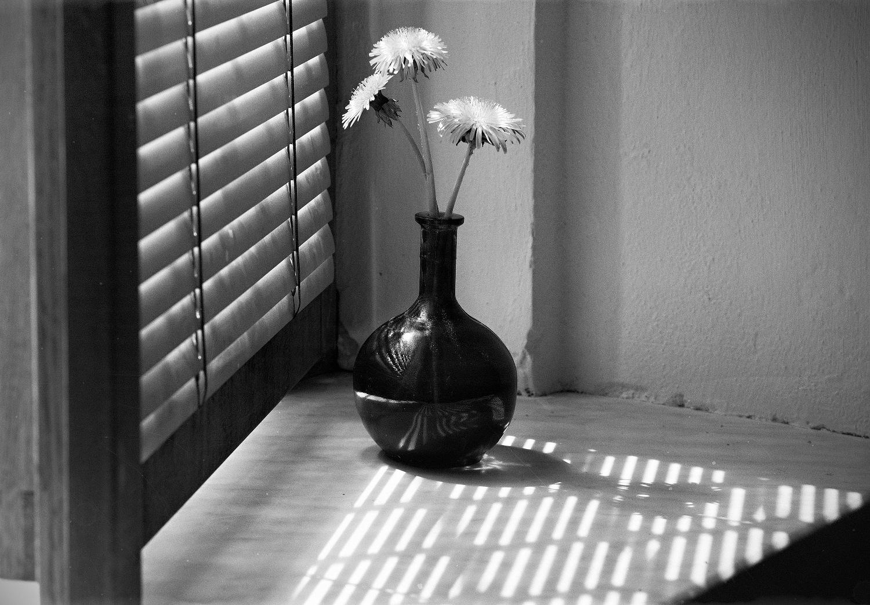 Dandelions by jam3