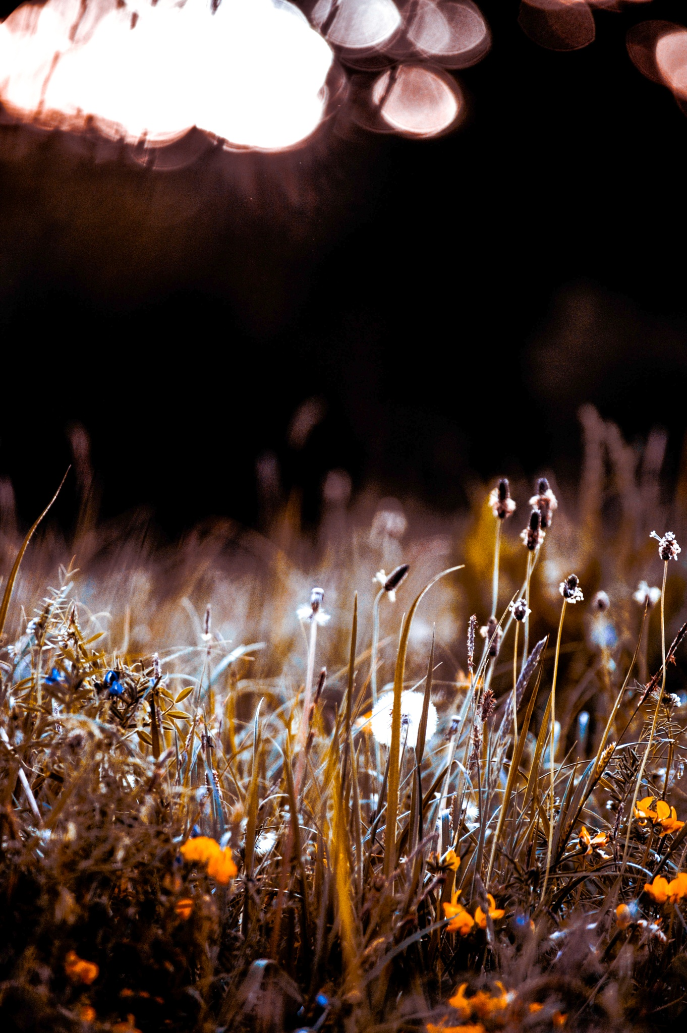 Flowers by Ganea Rafael