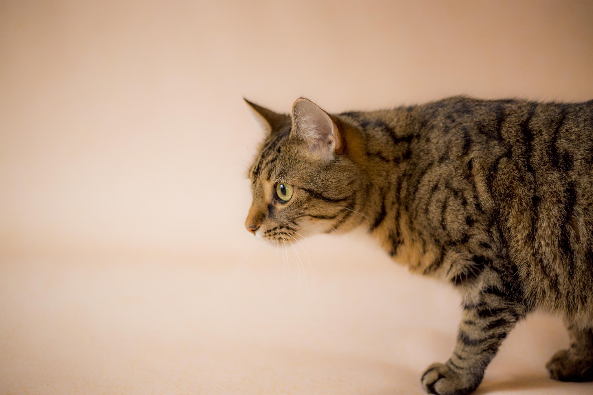 cat by Joanna Clark