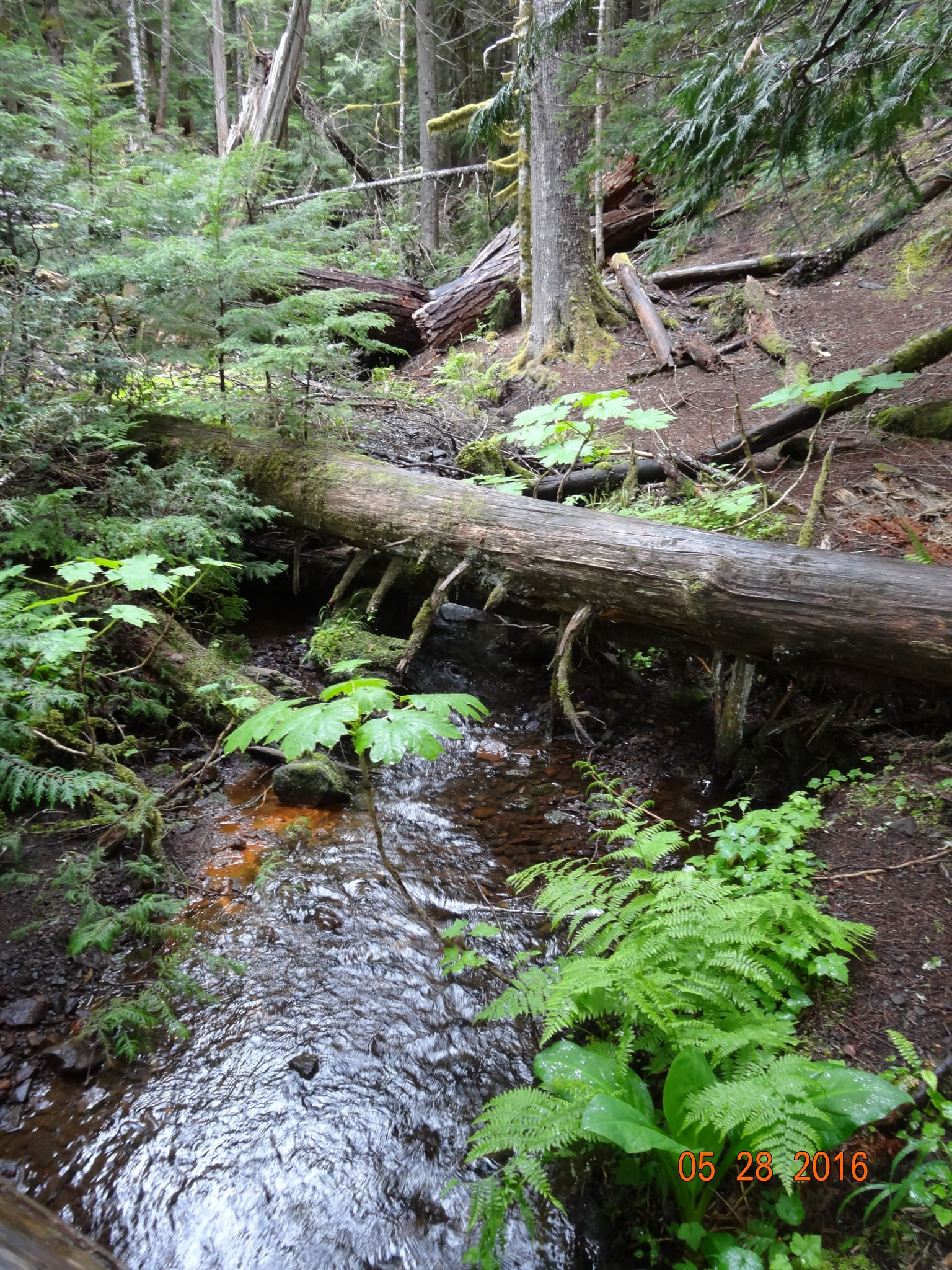 stream on the short hike by Peter O Merz