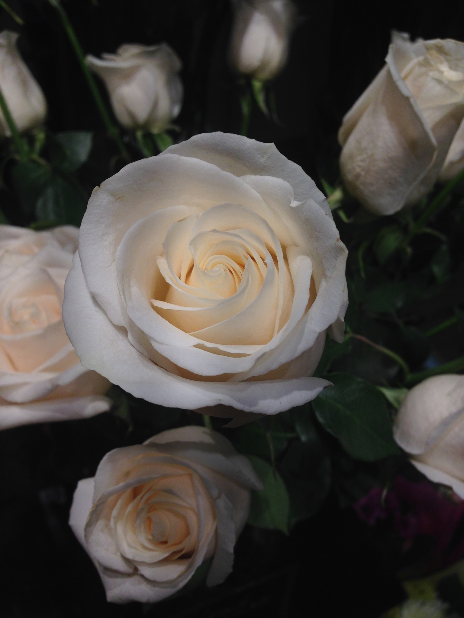 White roses by Peter O Merz