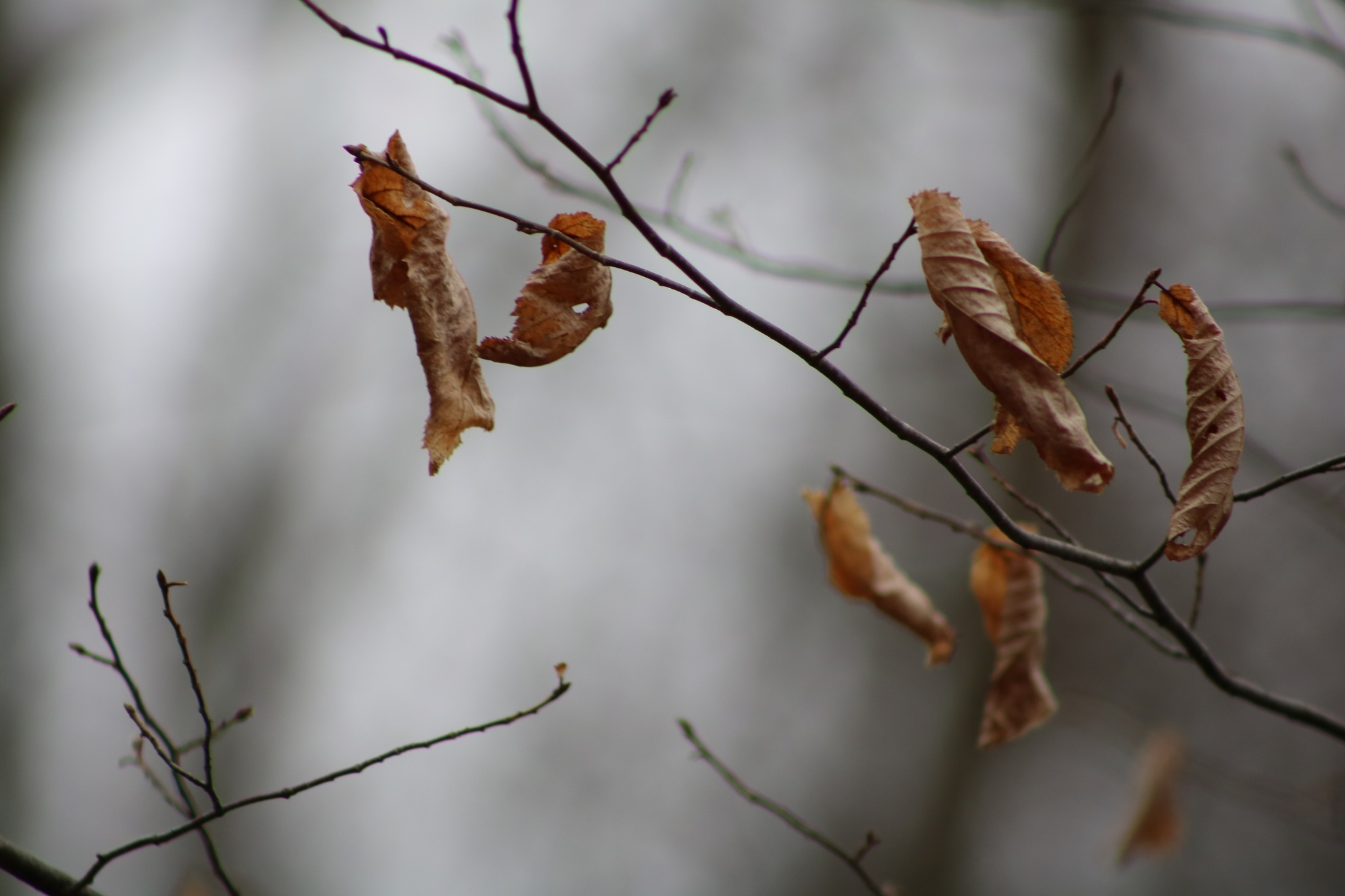 leaves left on the trees by Peter O Merz