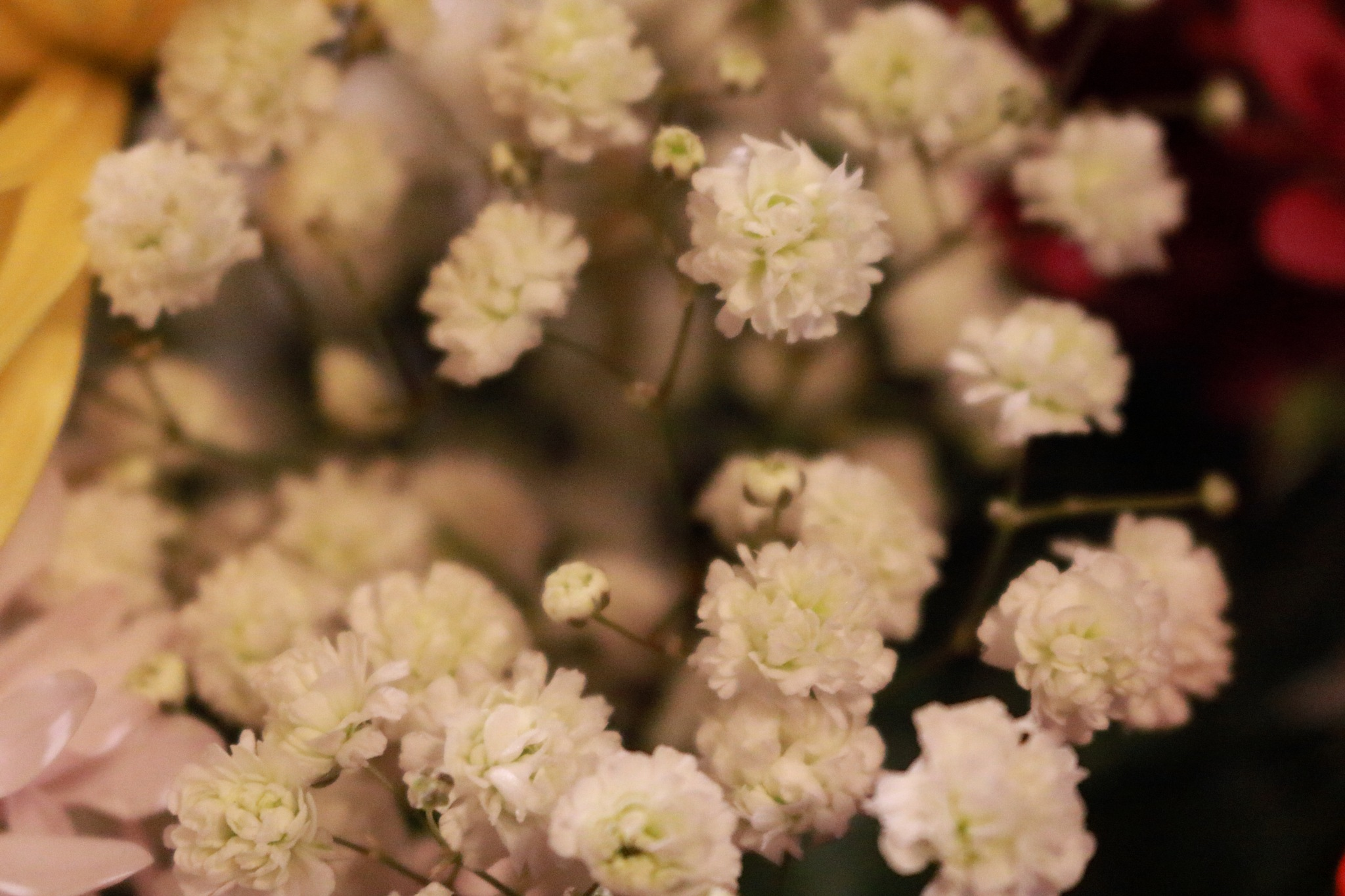 babys breath by Peter O Merz