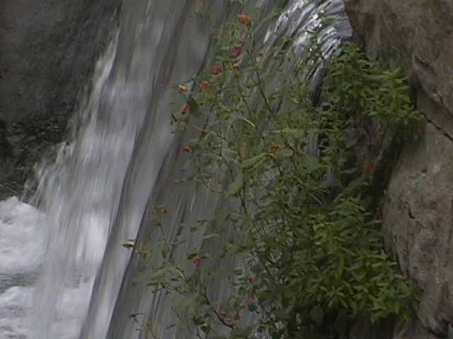 flowers by the falls by Peter O Merz