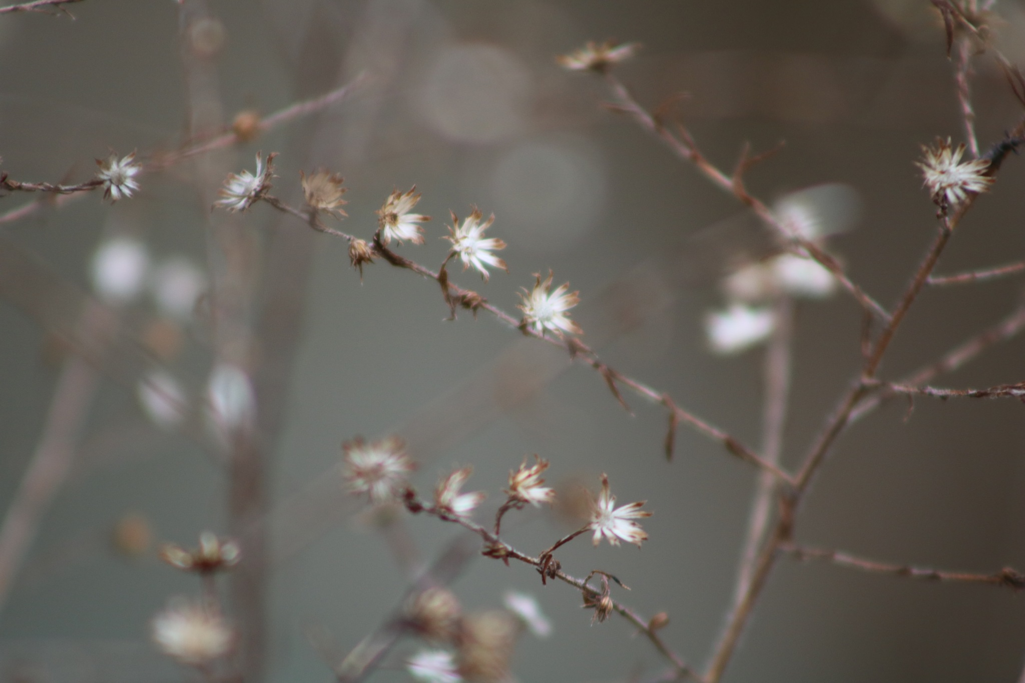 little white flowers by Peter O Merz