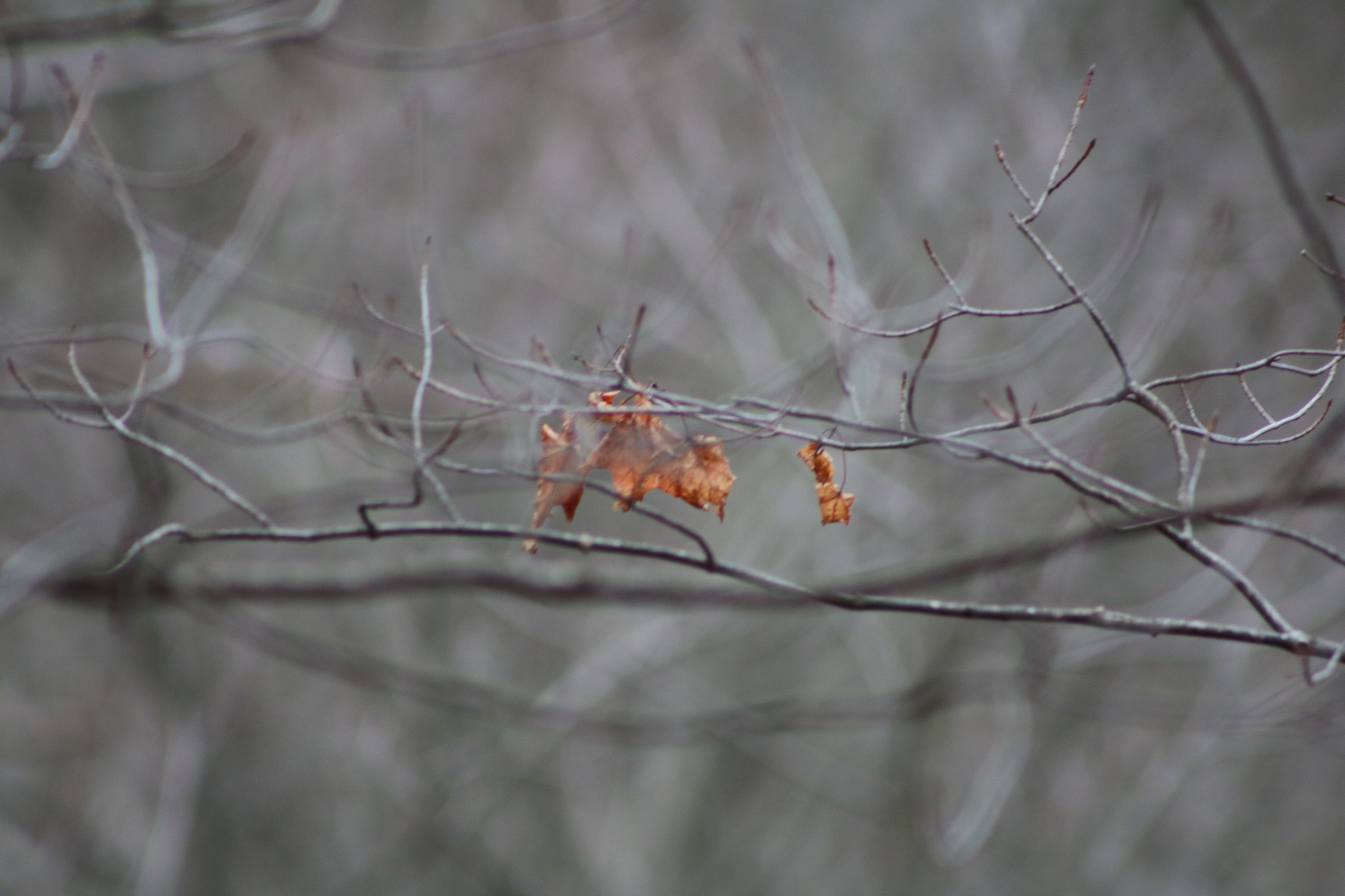 a few leaves by Peter O Merz