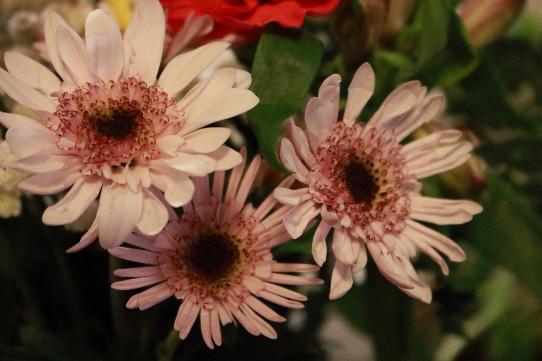 light pink asters by Peter O Merz