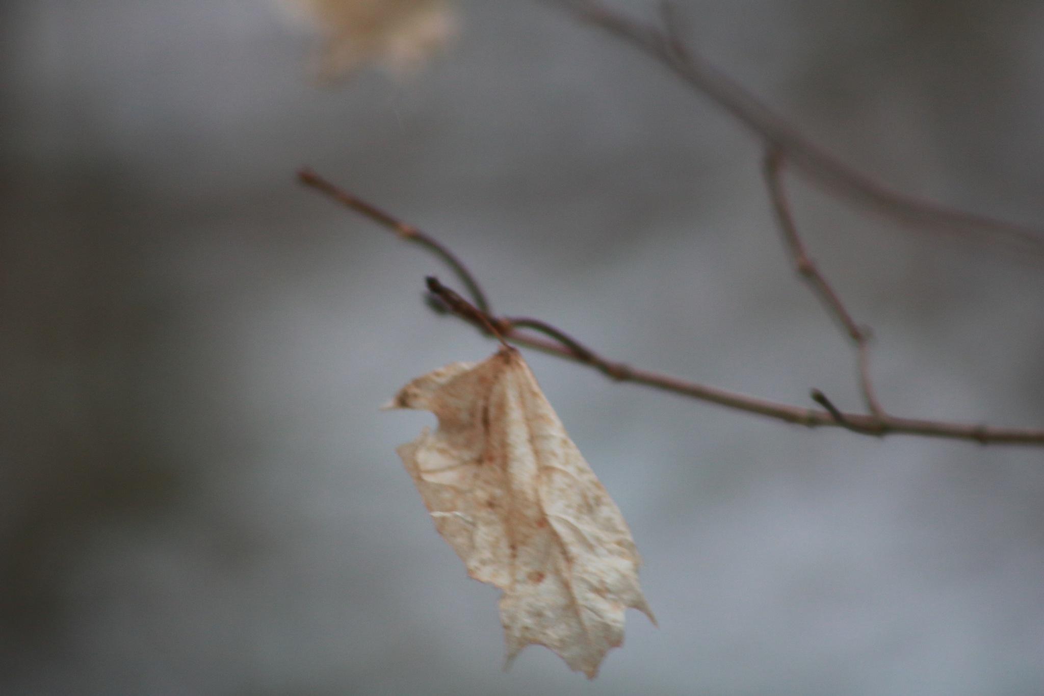 lone leaf by Peter O Merz