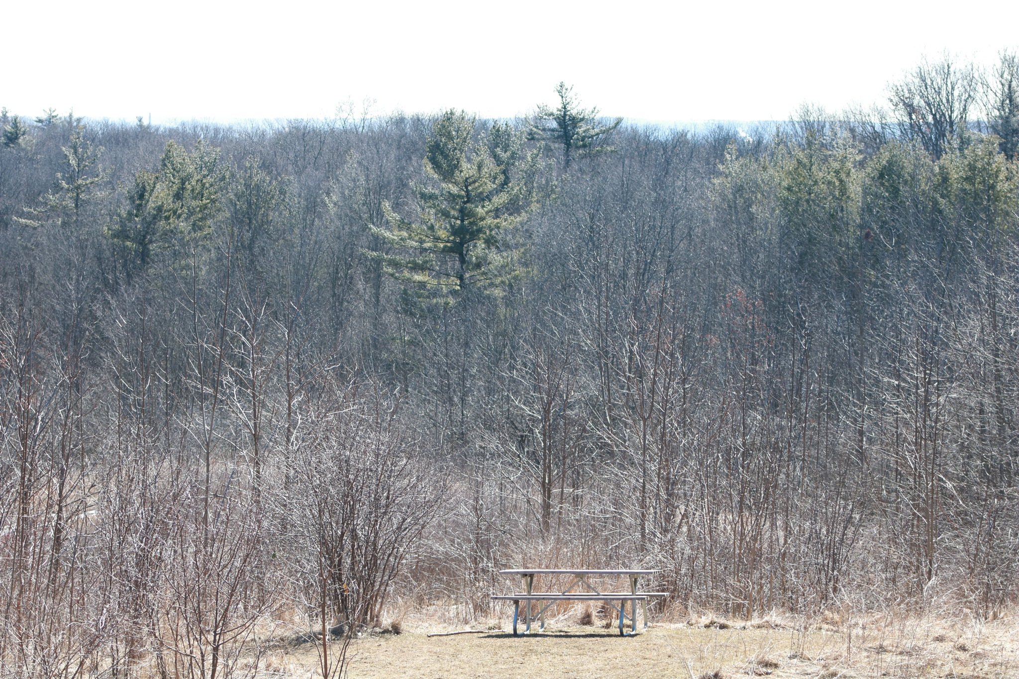 lonely picnic table by Peter O Merz