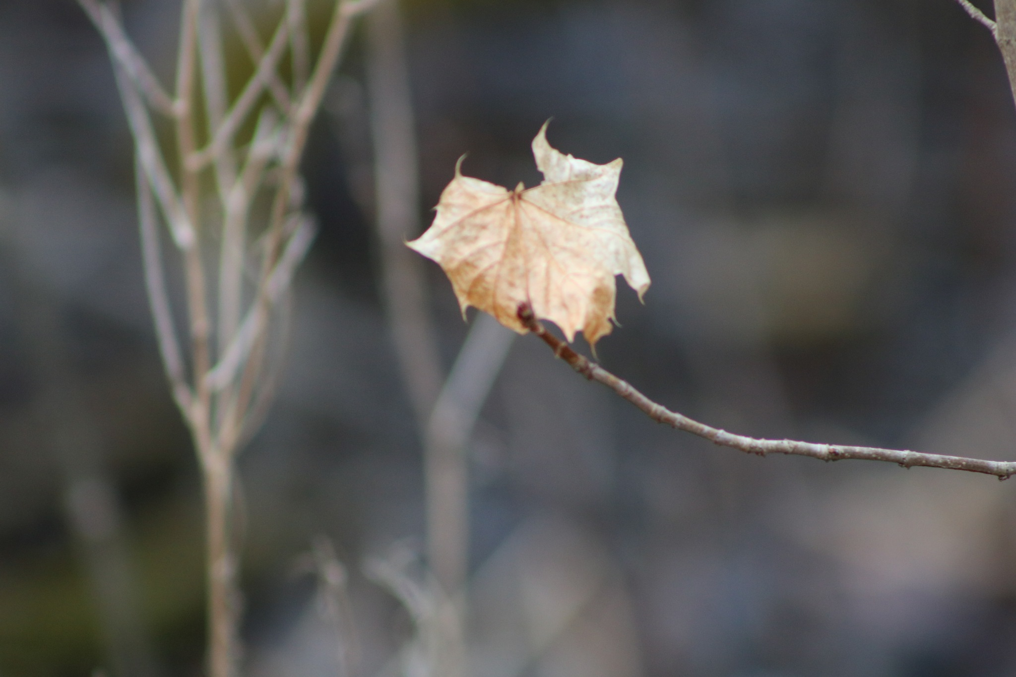 one leaf left by Peter O Merz