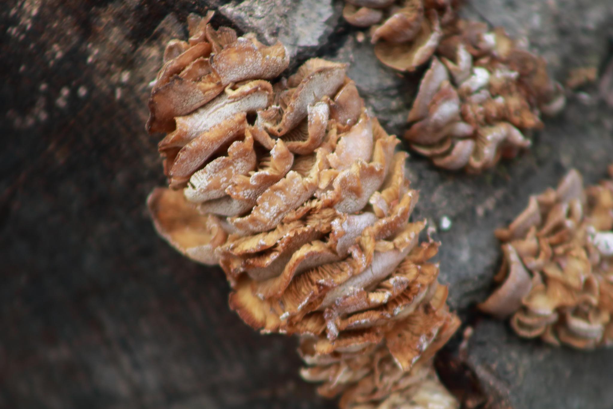 fungi up close! by Peter O Merz