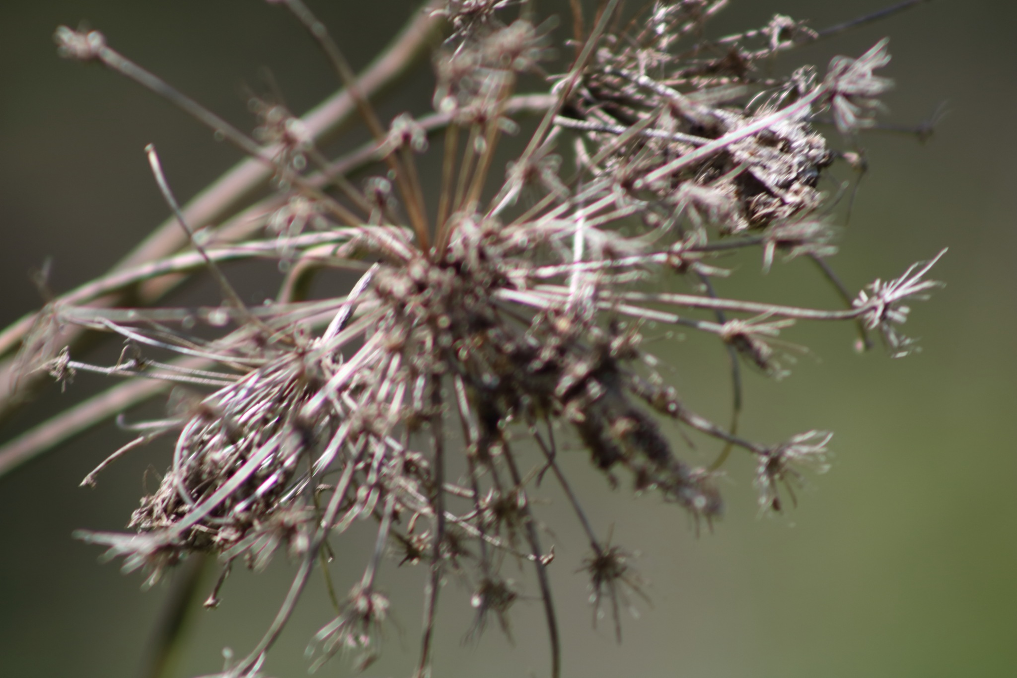 dried weed by Peter O Merz