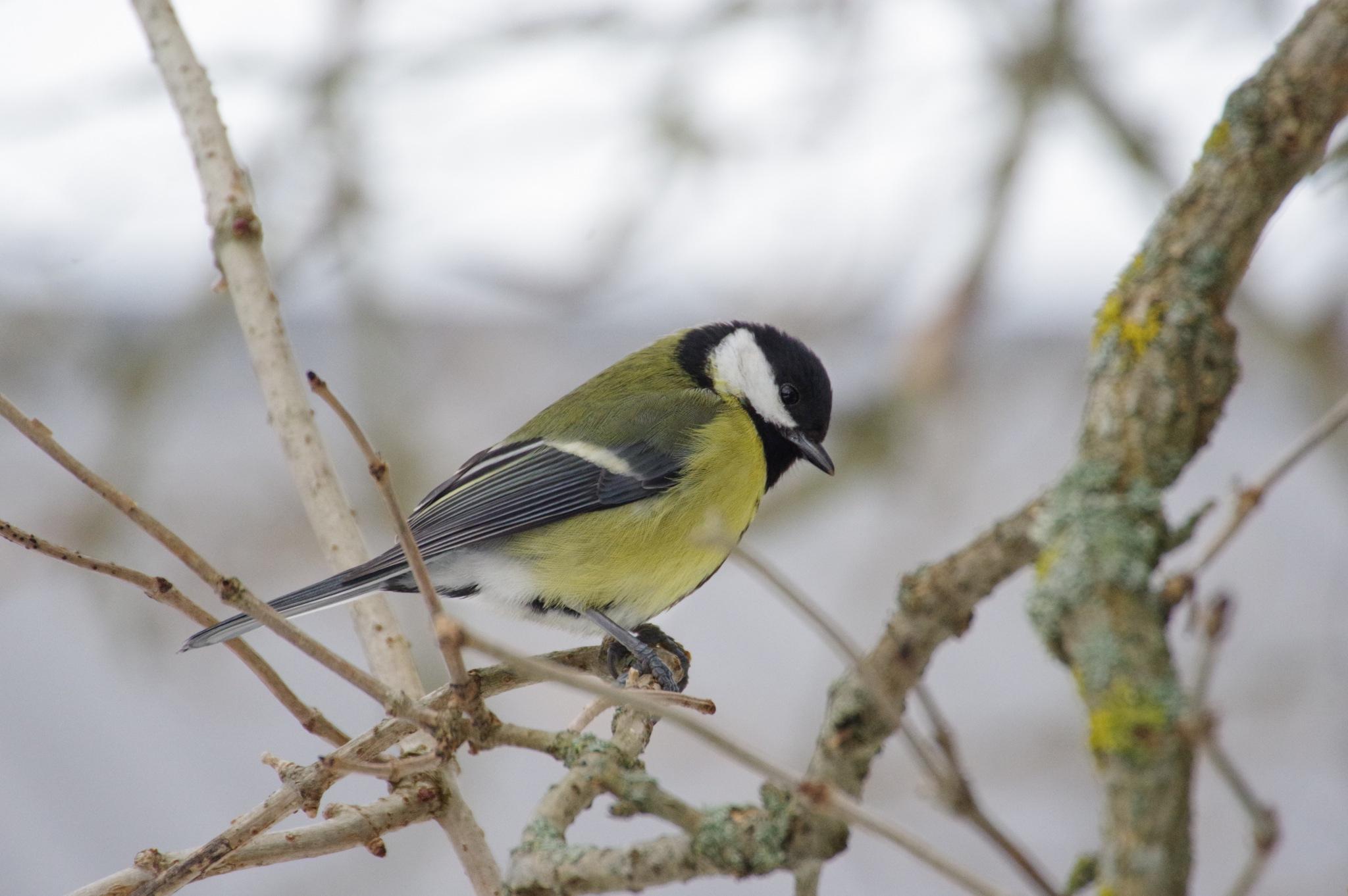 Photo in Animal #bird