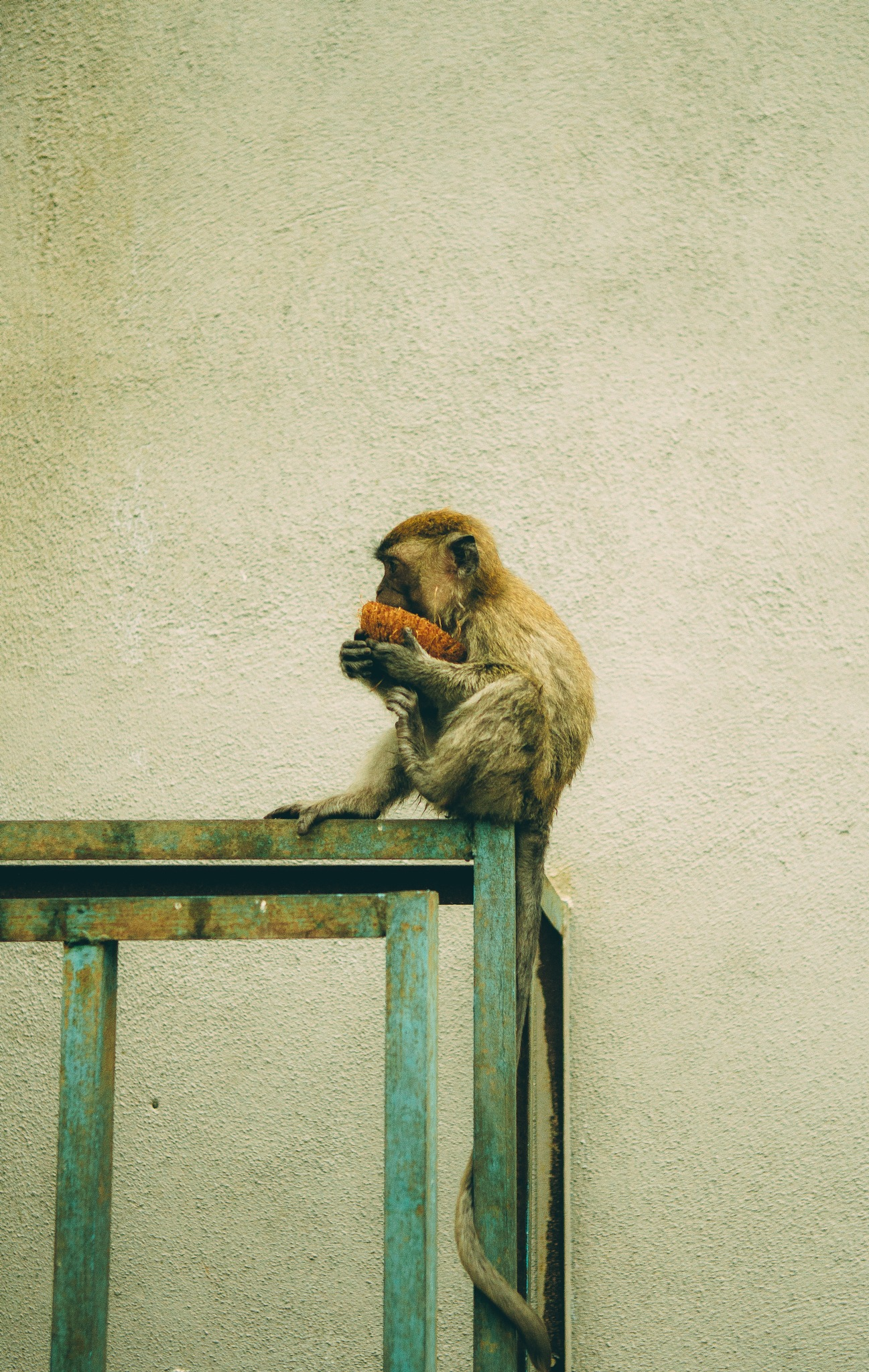 Monkey eating by gsoul
