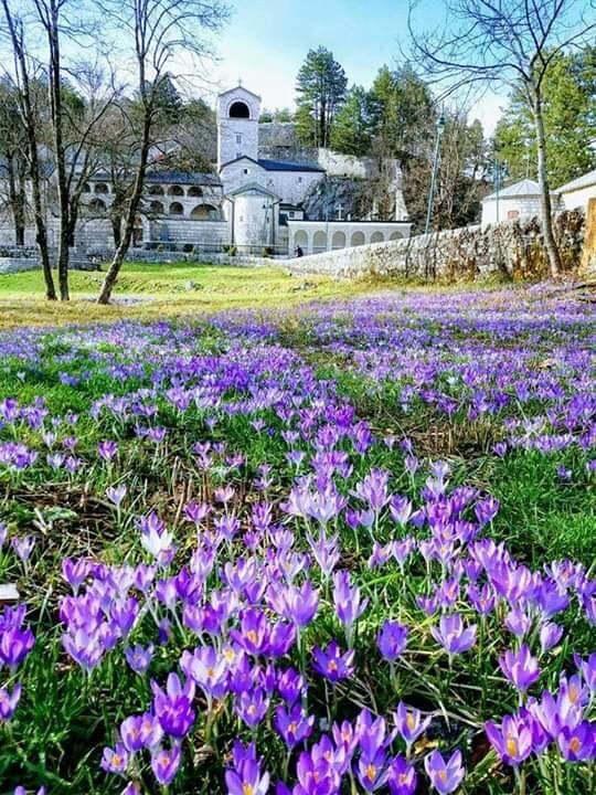 Monasteries and flowers by Dejan Jorganovic